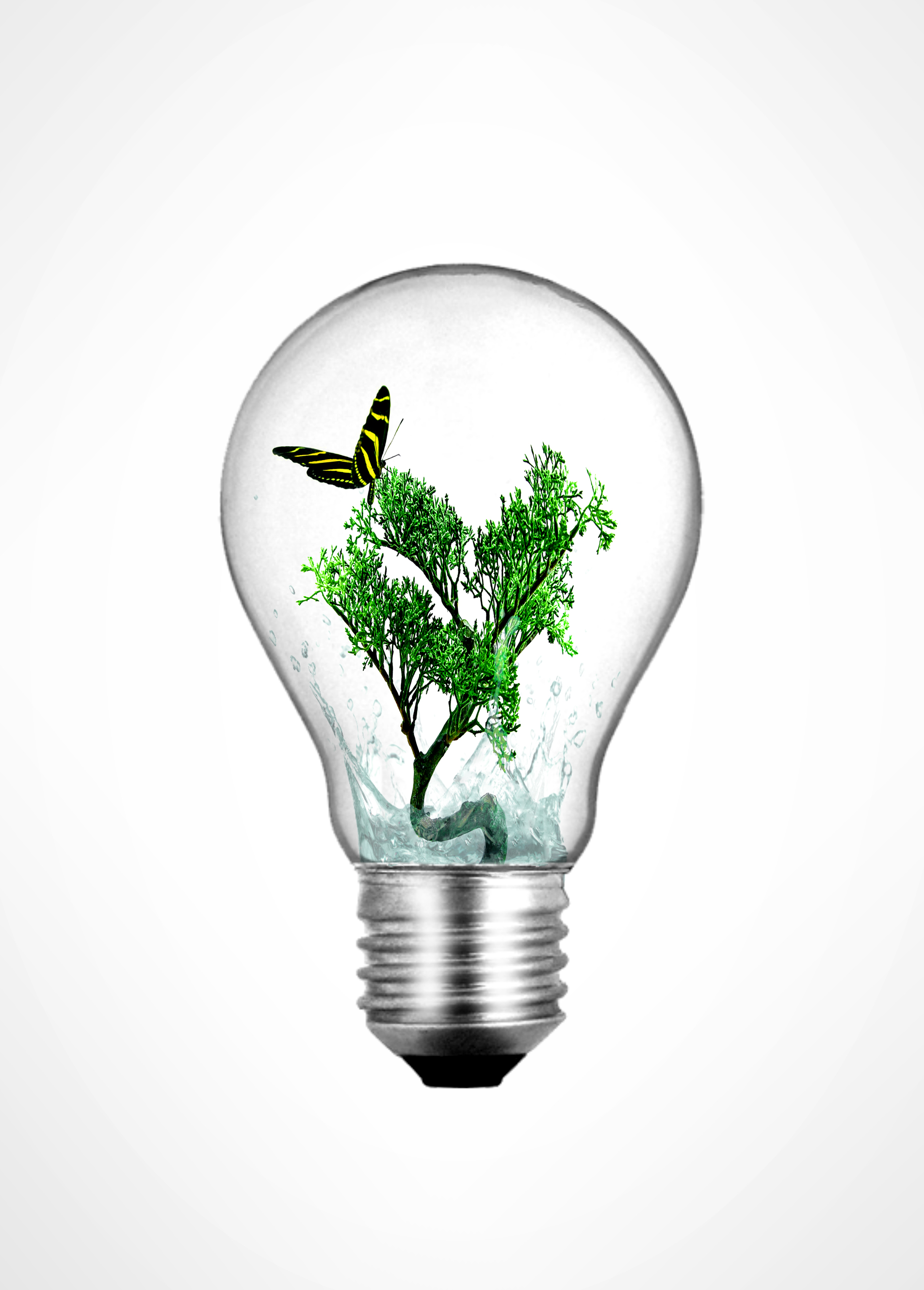 Lightbulb with bonsai plant and butterfly inside, Alternative, Recycling, Recycle, Protection, HQ Photo