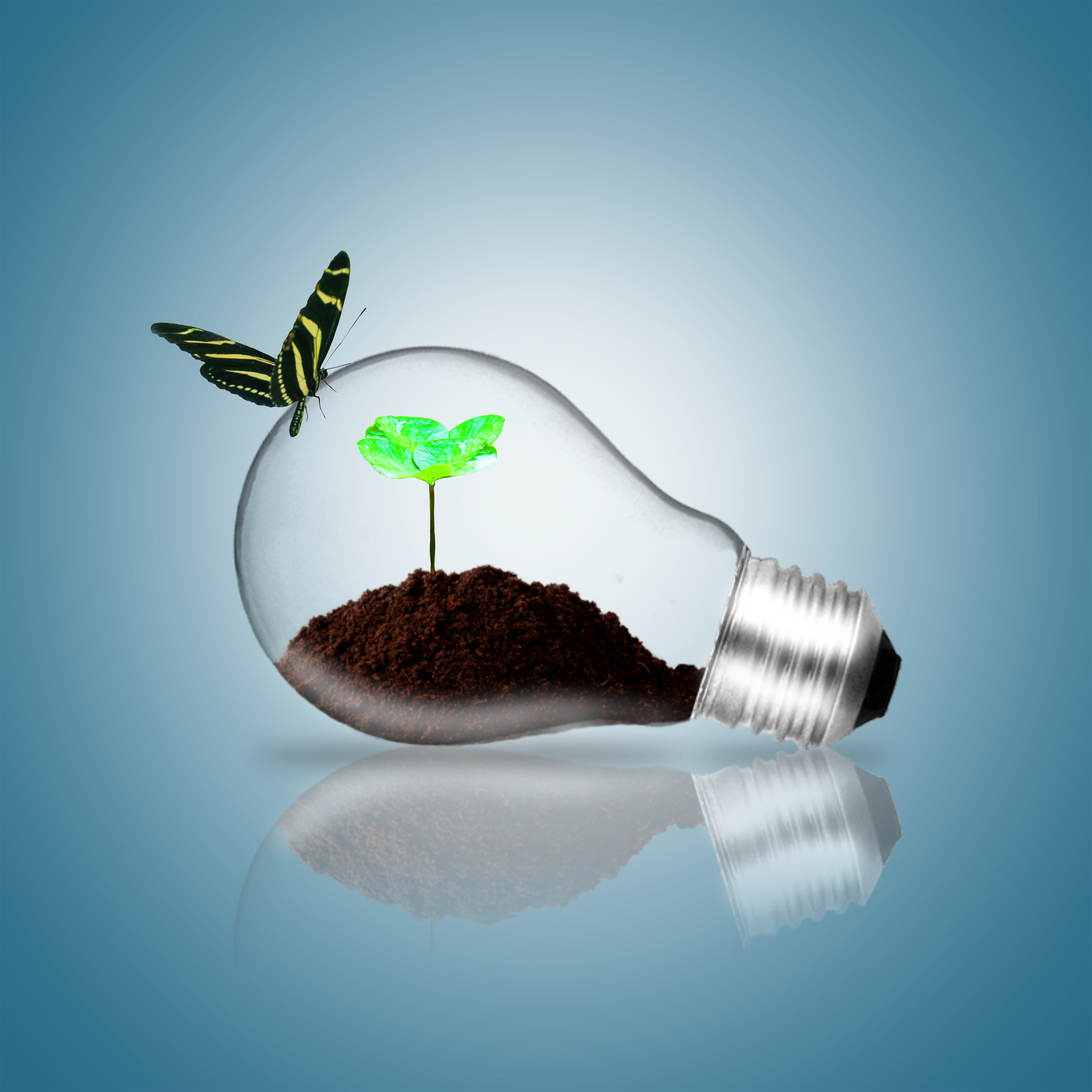 Lightbulb with butterfly and plant sprout photo