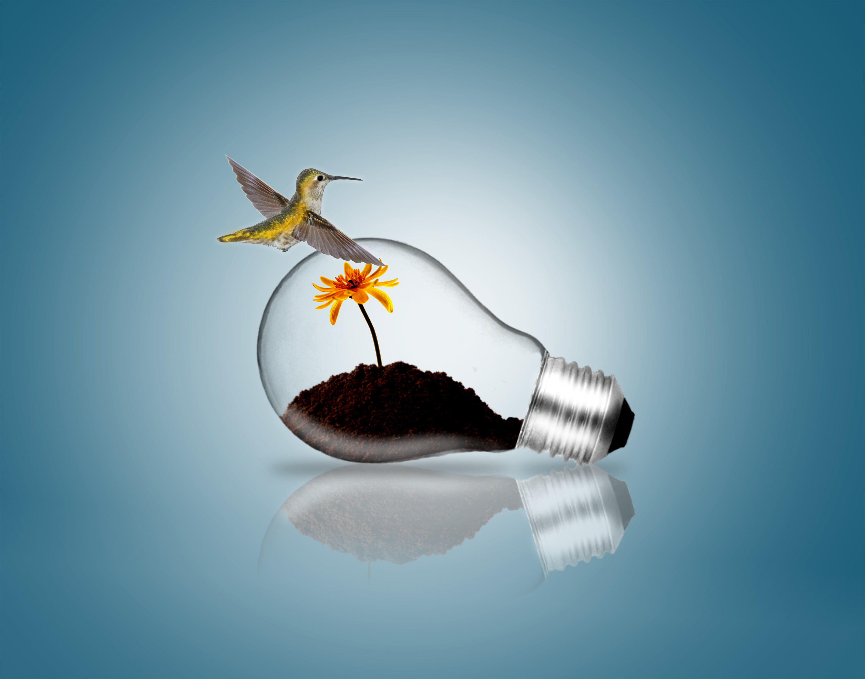 Lightbulb with hummingbird and plant sprout photo