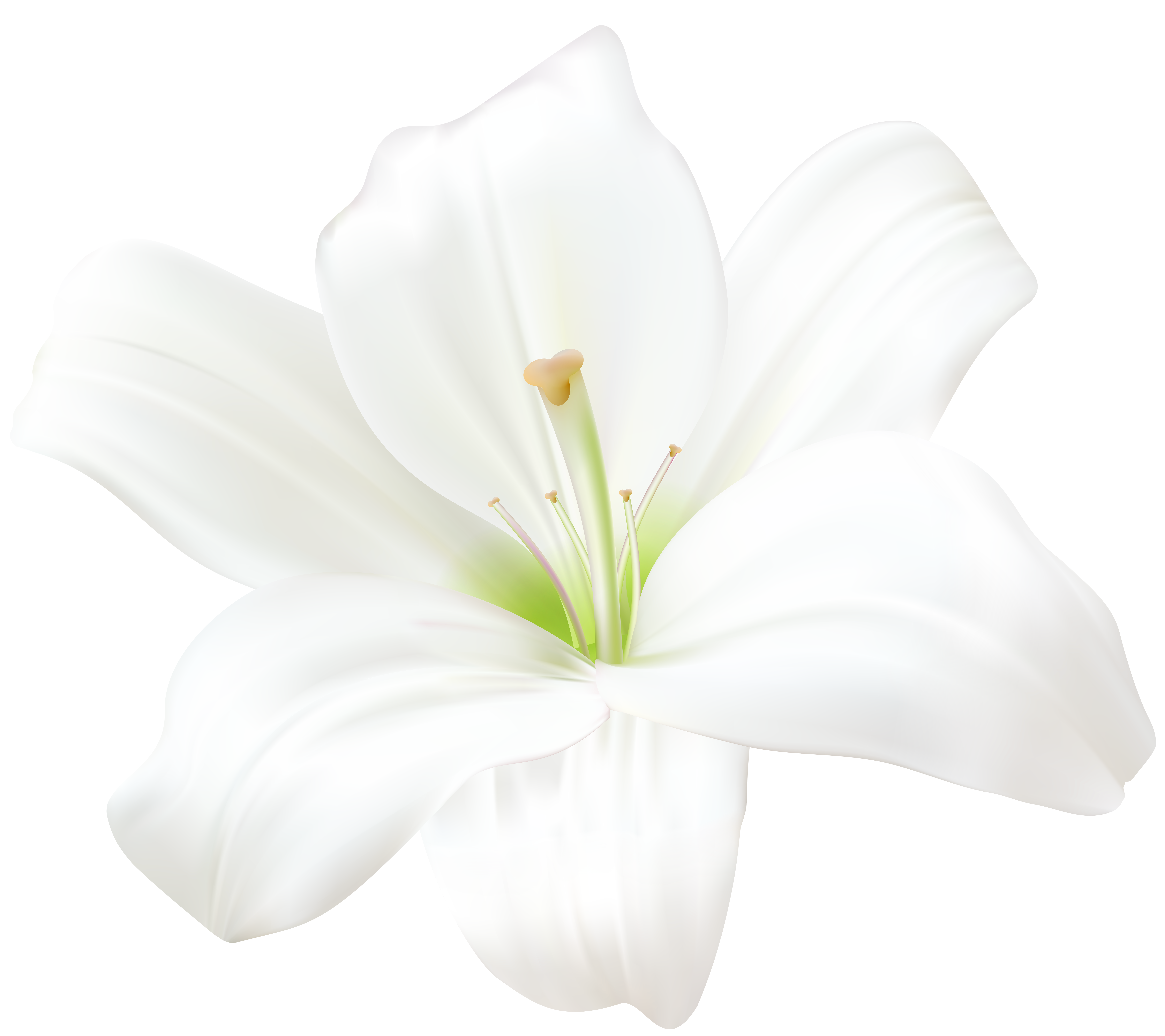 White Lily PNG Clip Art Image | Gallery Yopriceville - High-Quality ...