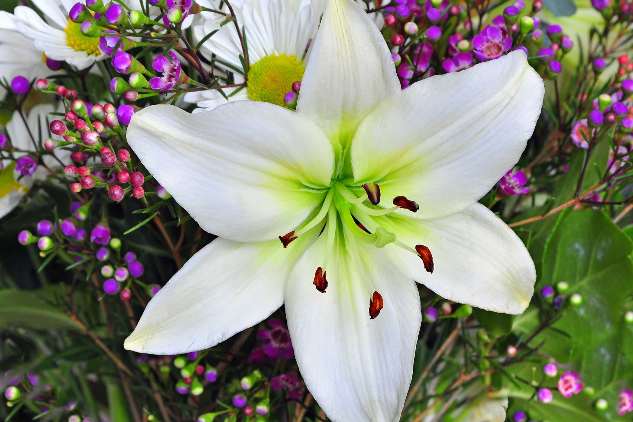 Easter Lily Poisoning in Dogs - Symptoms, Causes, Diagnosis ...