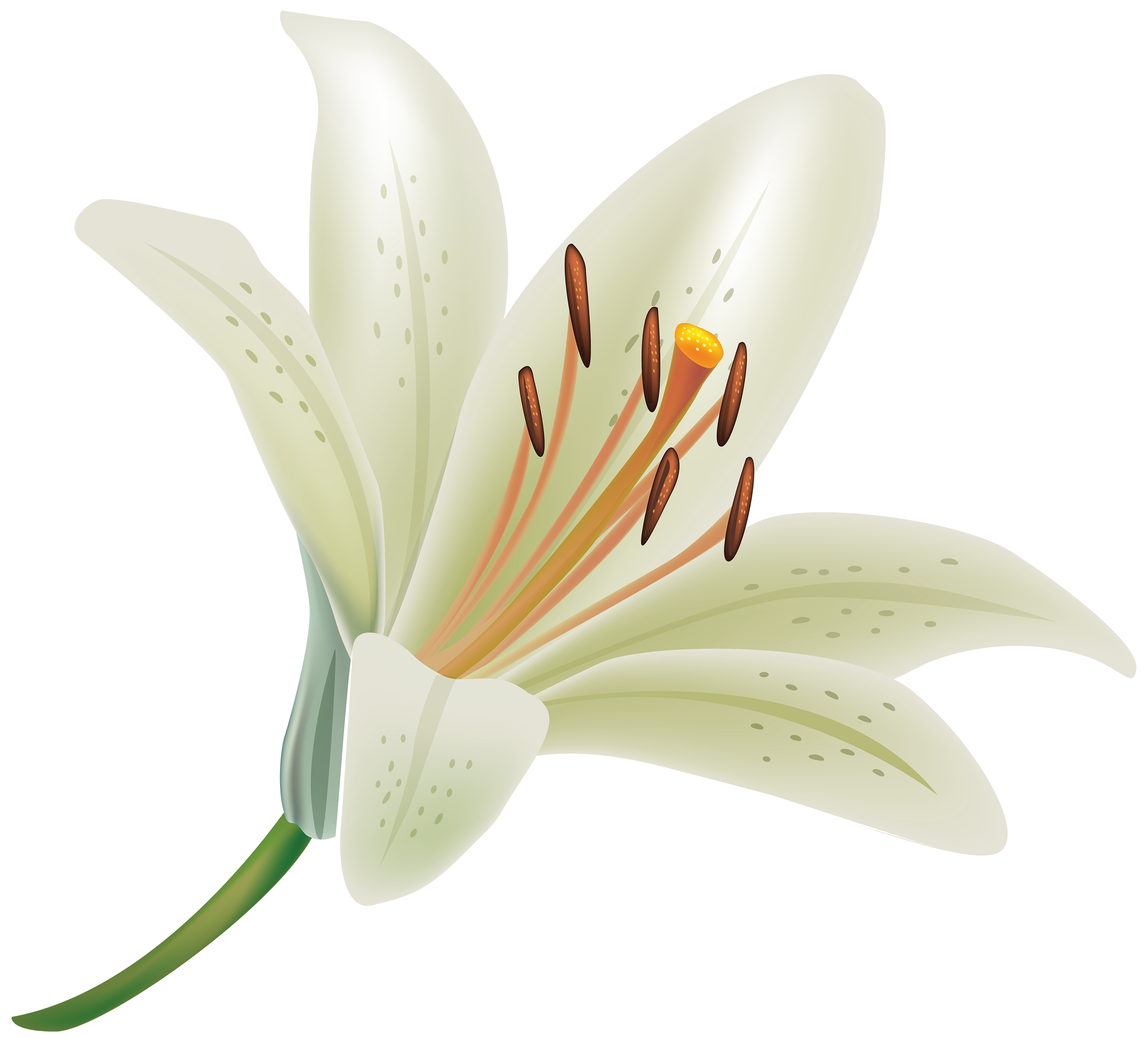 Free photo white lily summer white lily free download jooinn white lily flower png clipart best web clipart izmirmasajfo