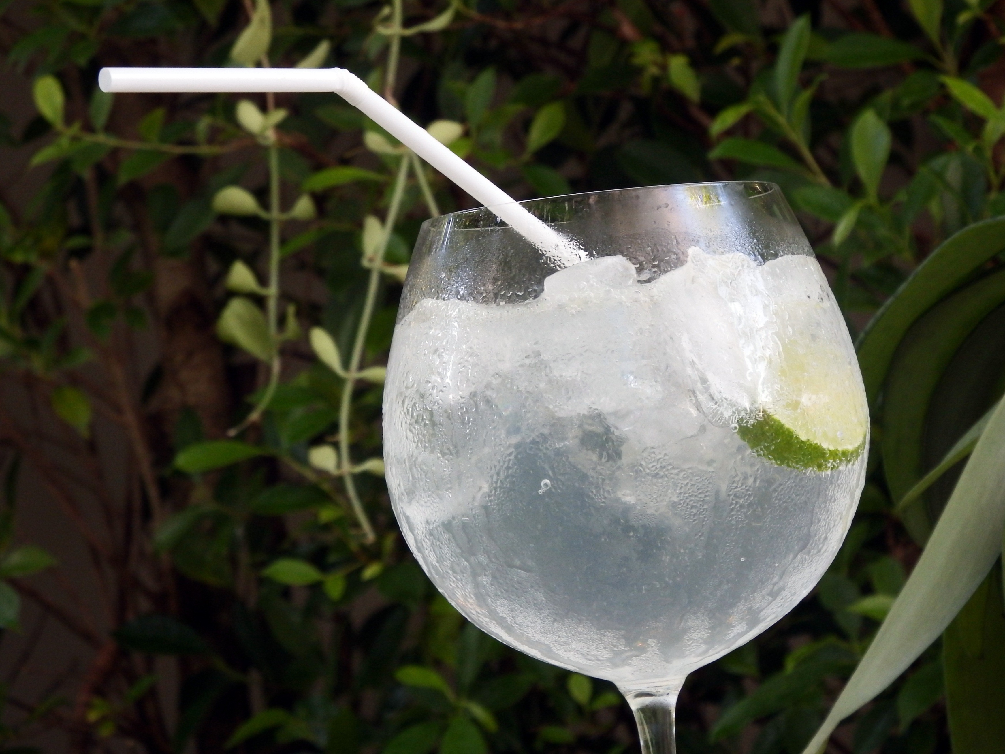 Lime cocktail in the garden photo