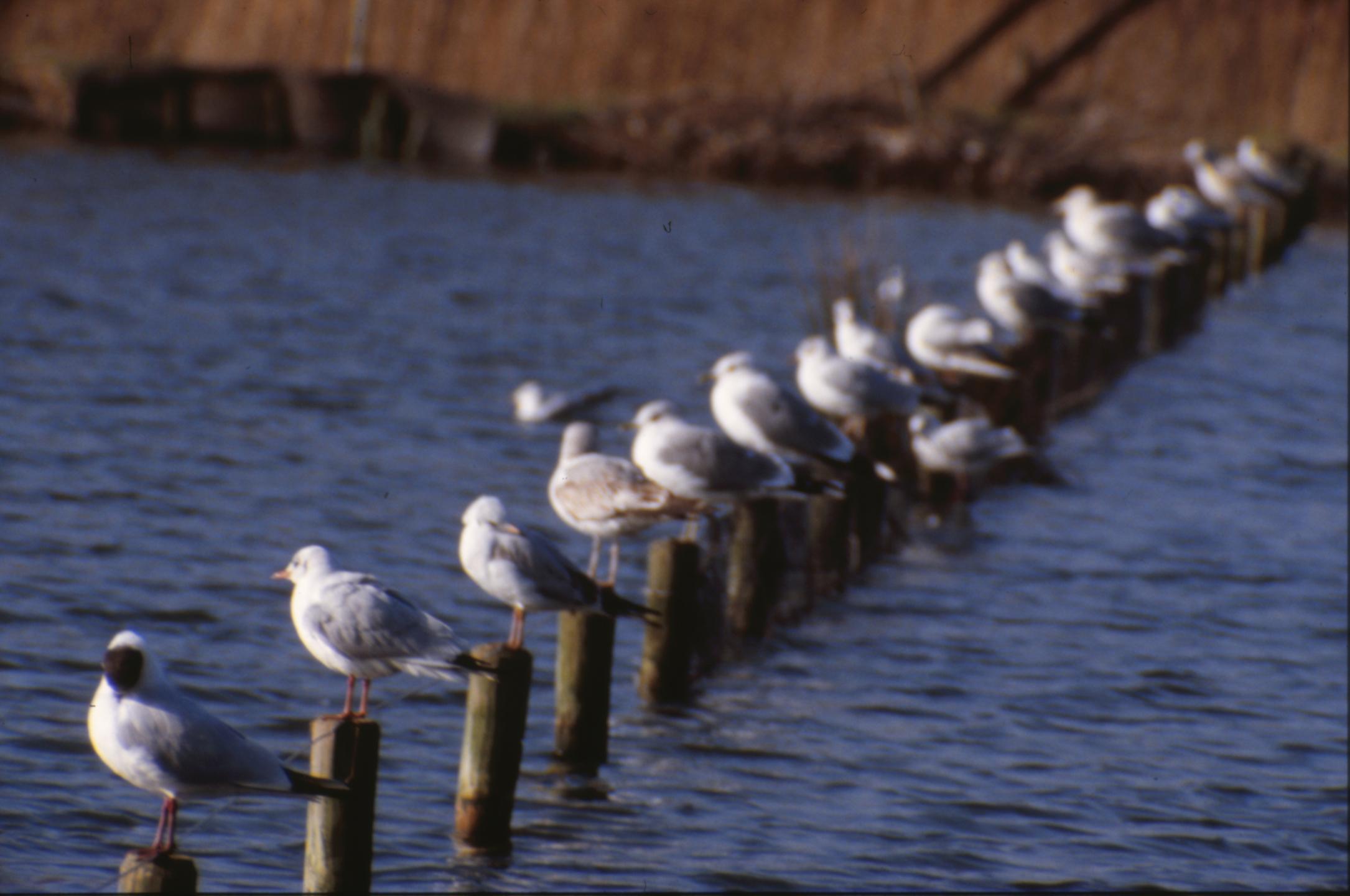 Line of seagulls photo