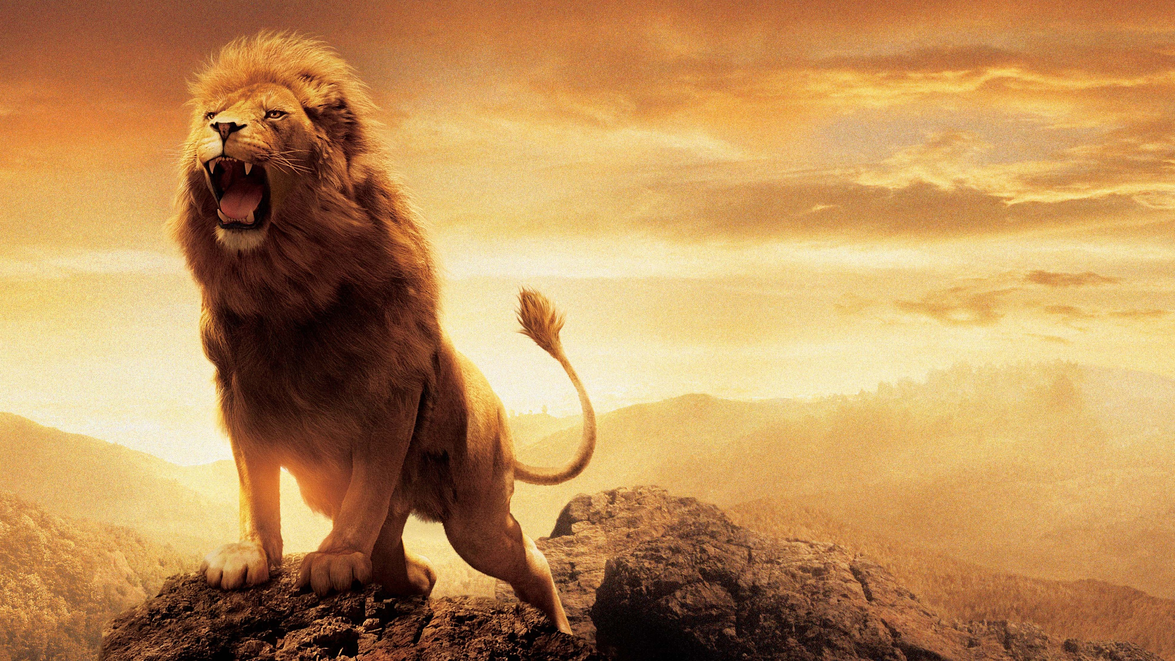 Narnia Lion Aslan Wallpapers in jpg format for free download