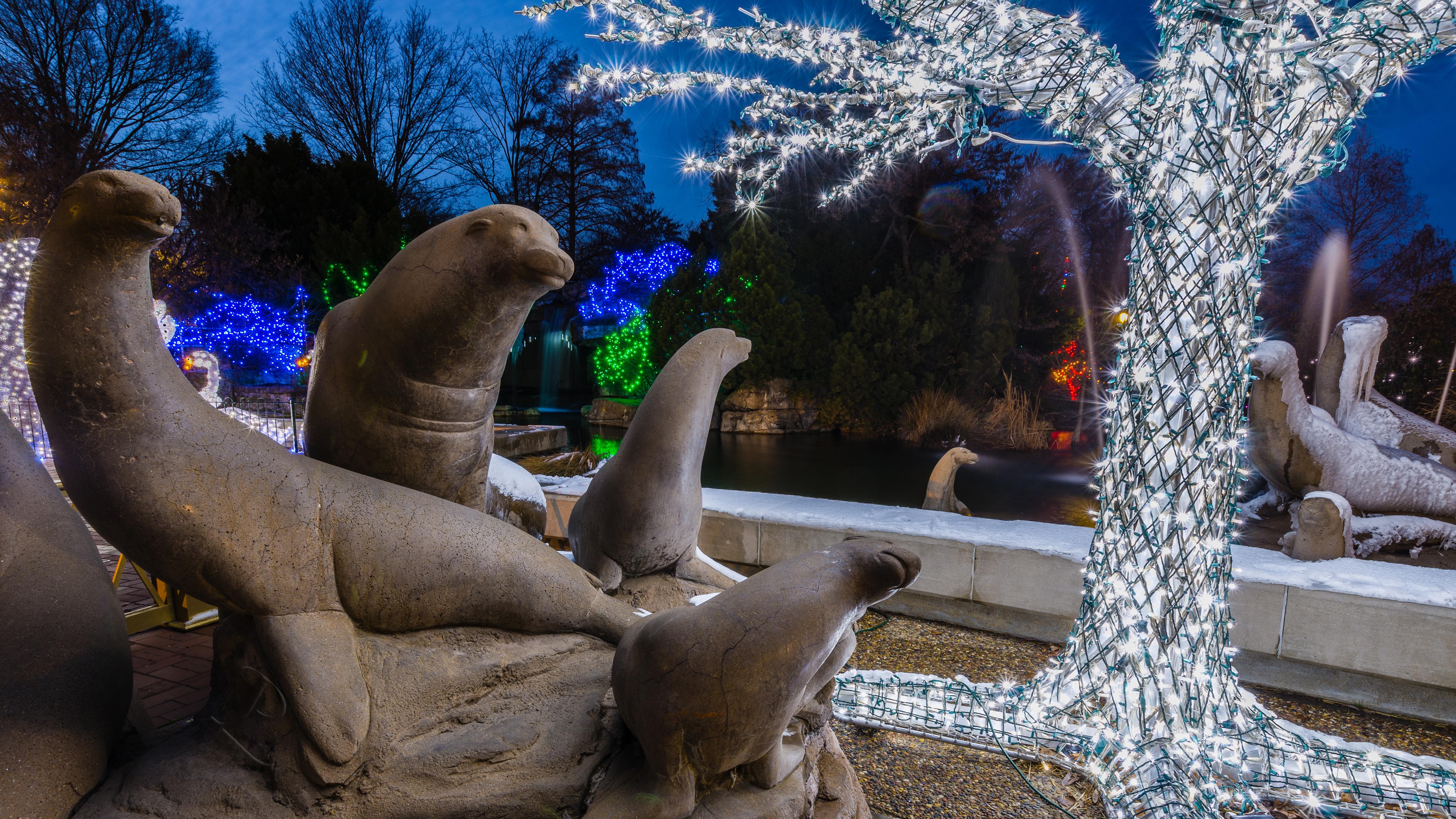 Lion Around The Tree, Animal, Christmas, Lights, Missouri, HQ Photo