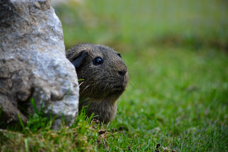 Little, Adorable, Animal, Cute, Friend, HQ Photo