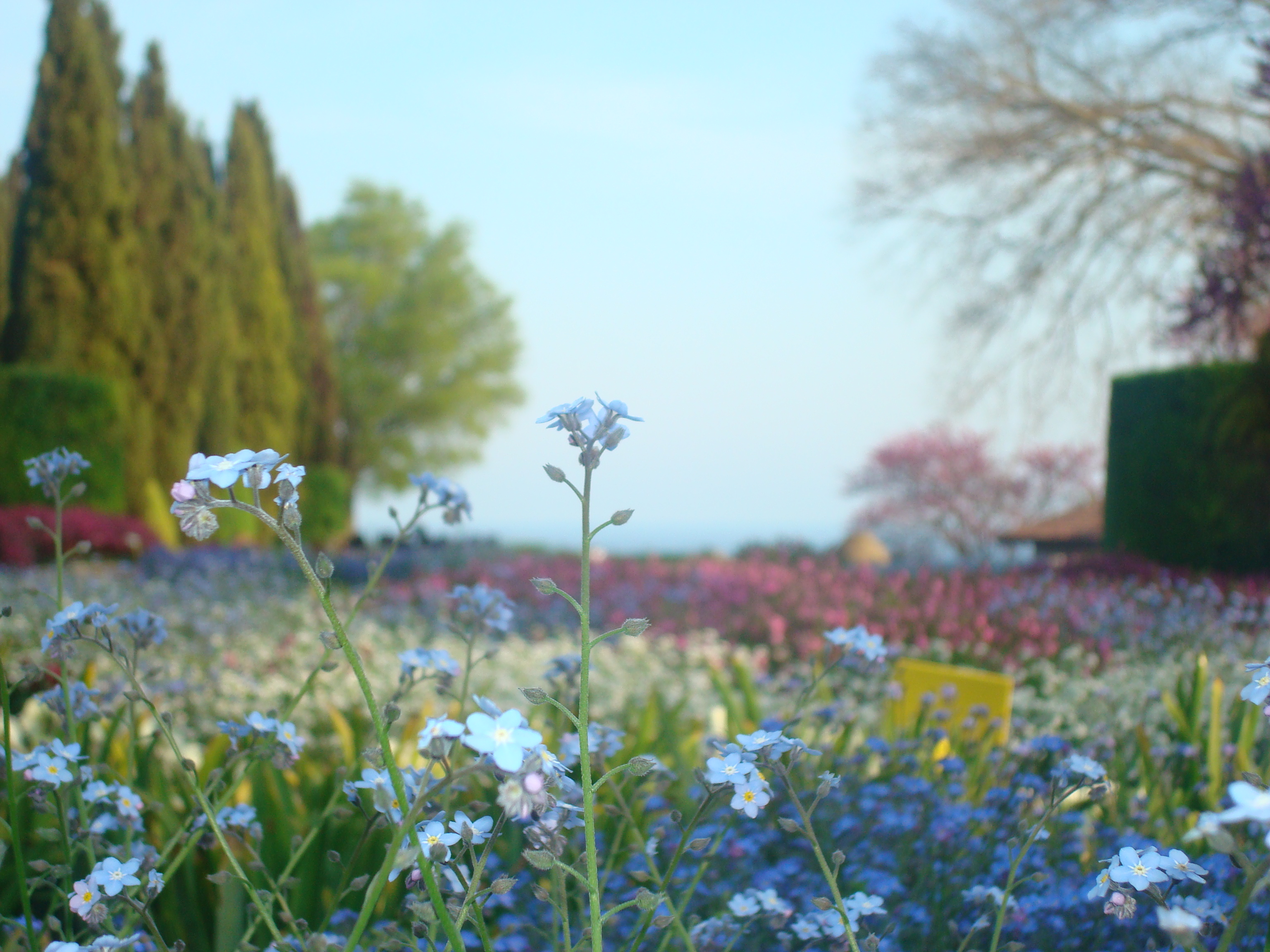 Little blue flower in a colorful garden, Garden, Pretty, Plants, Outdoors, HQ Photo