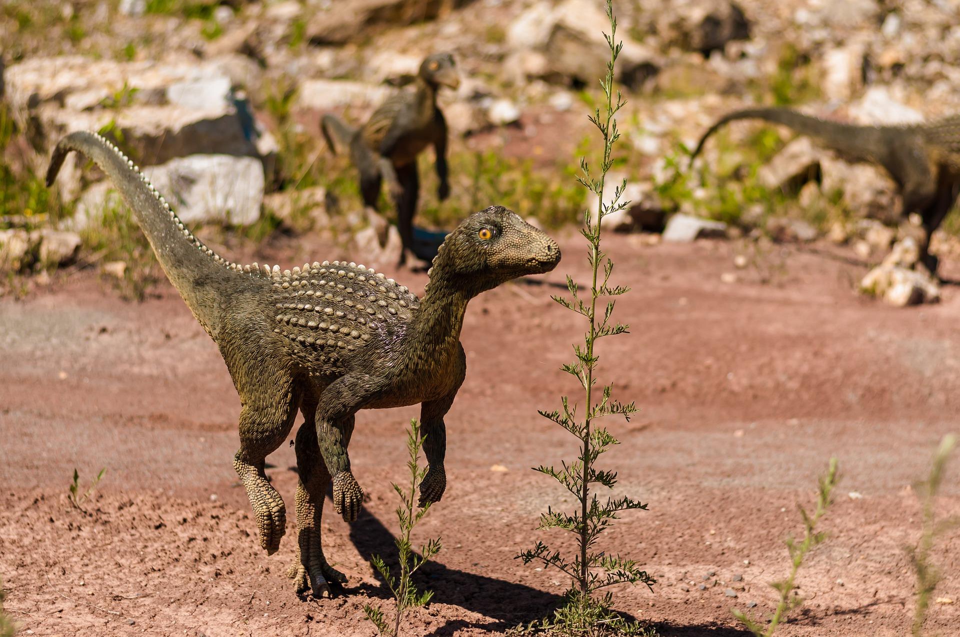 Little dinosaur photo