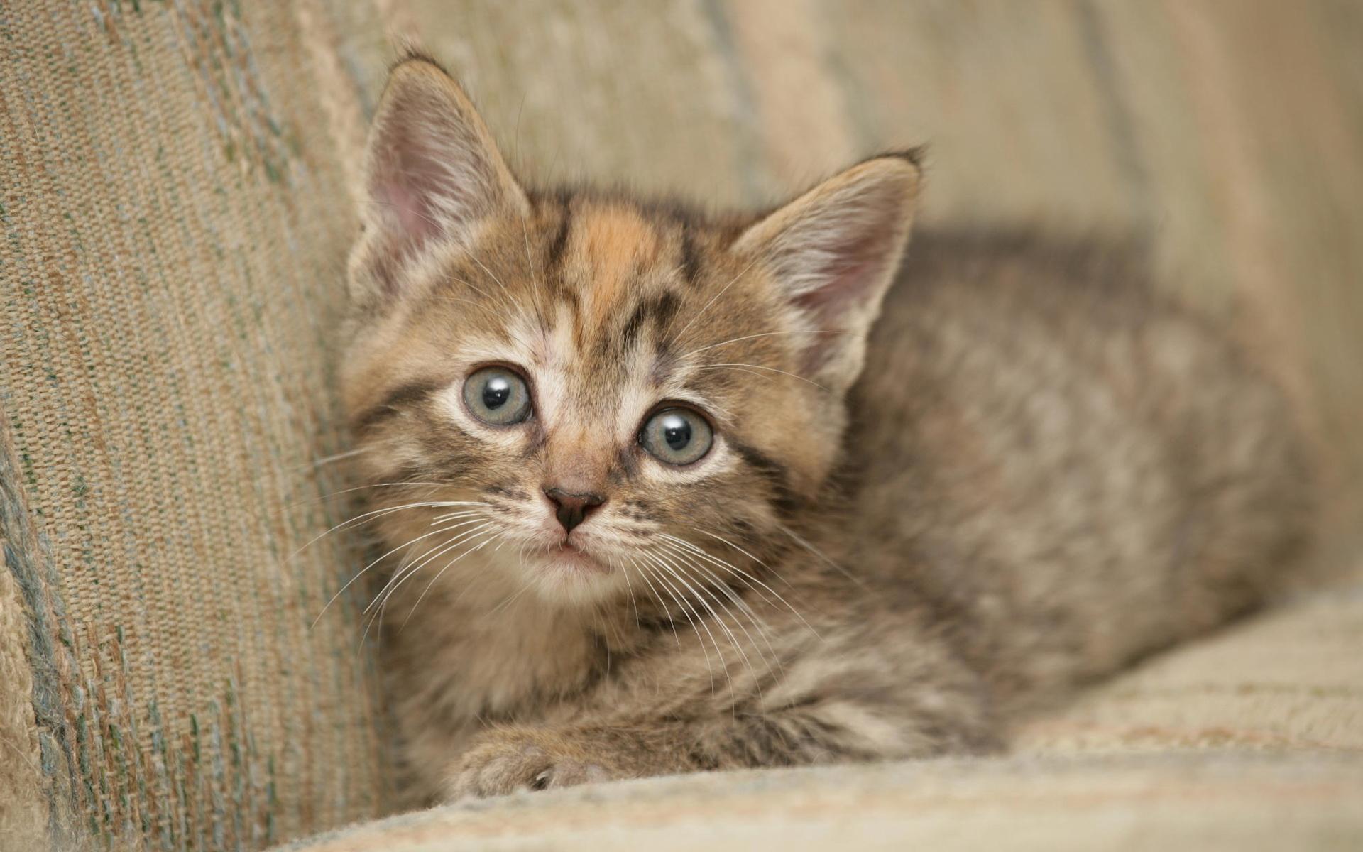 Little kitten / 1920 x 1200 / Animals / Photography | MIRIADNA.COM