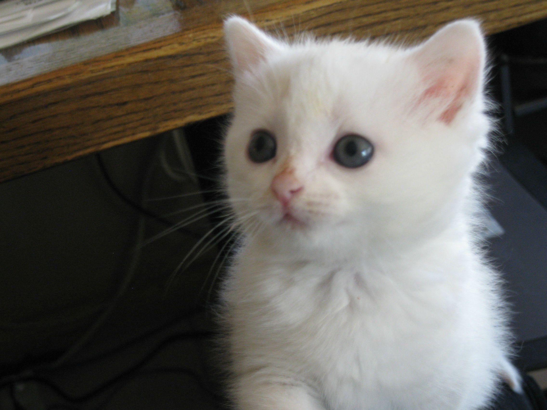 My little kitten Nimbus - Imgur