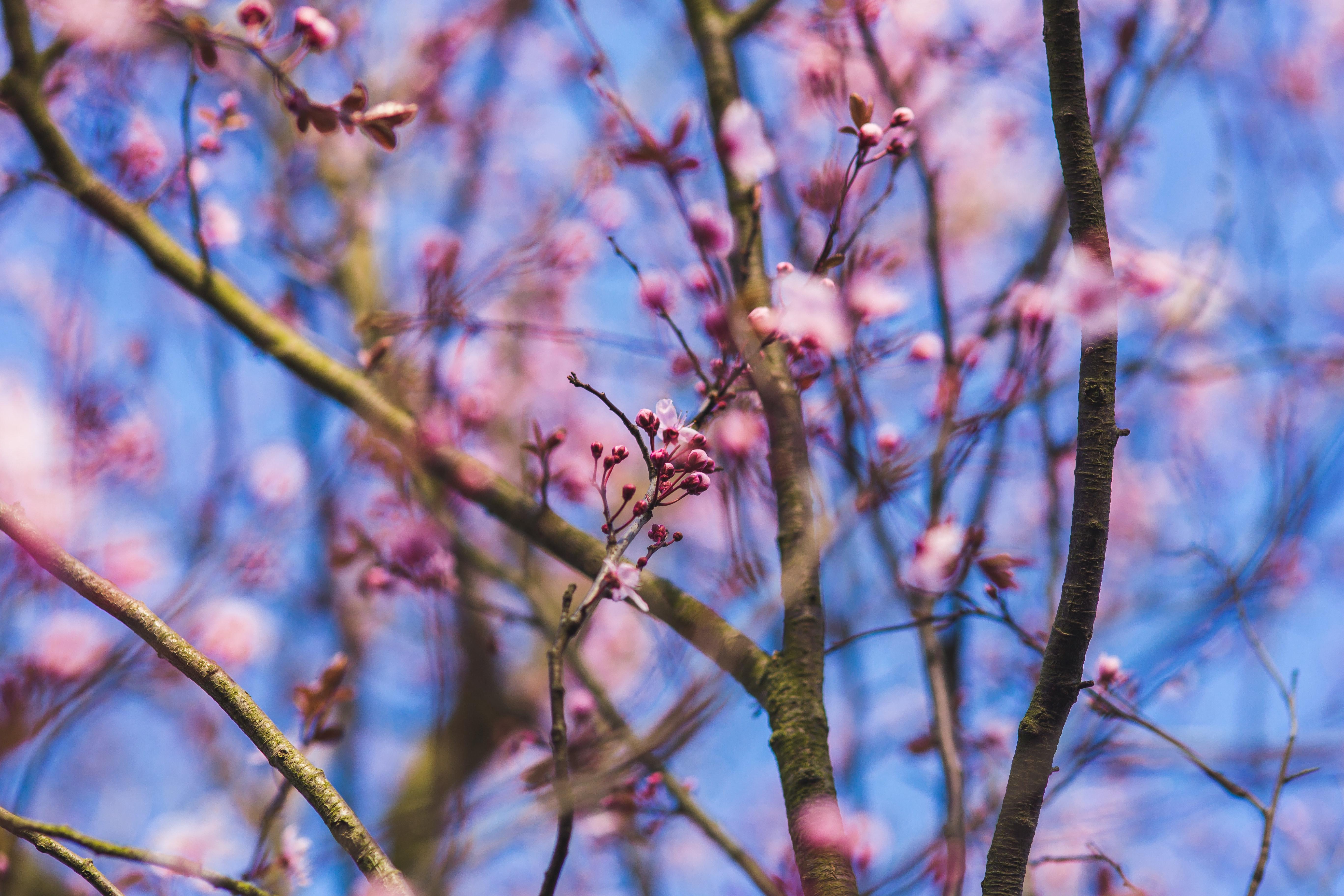 Free Photo Little Pink Flowers Purple Flowers Pink Spring