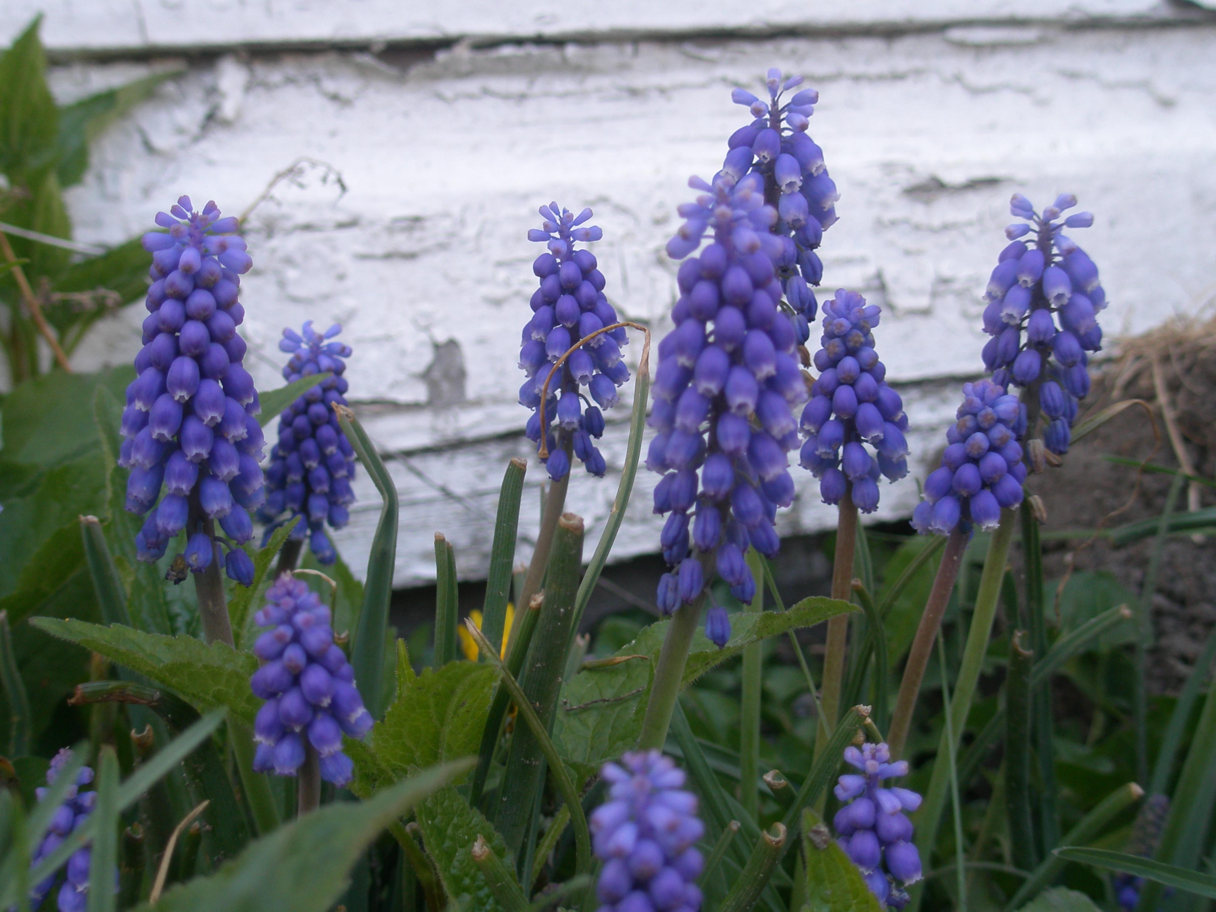 Little purple flower photo