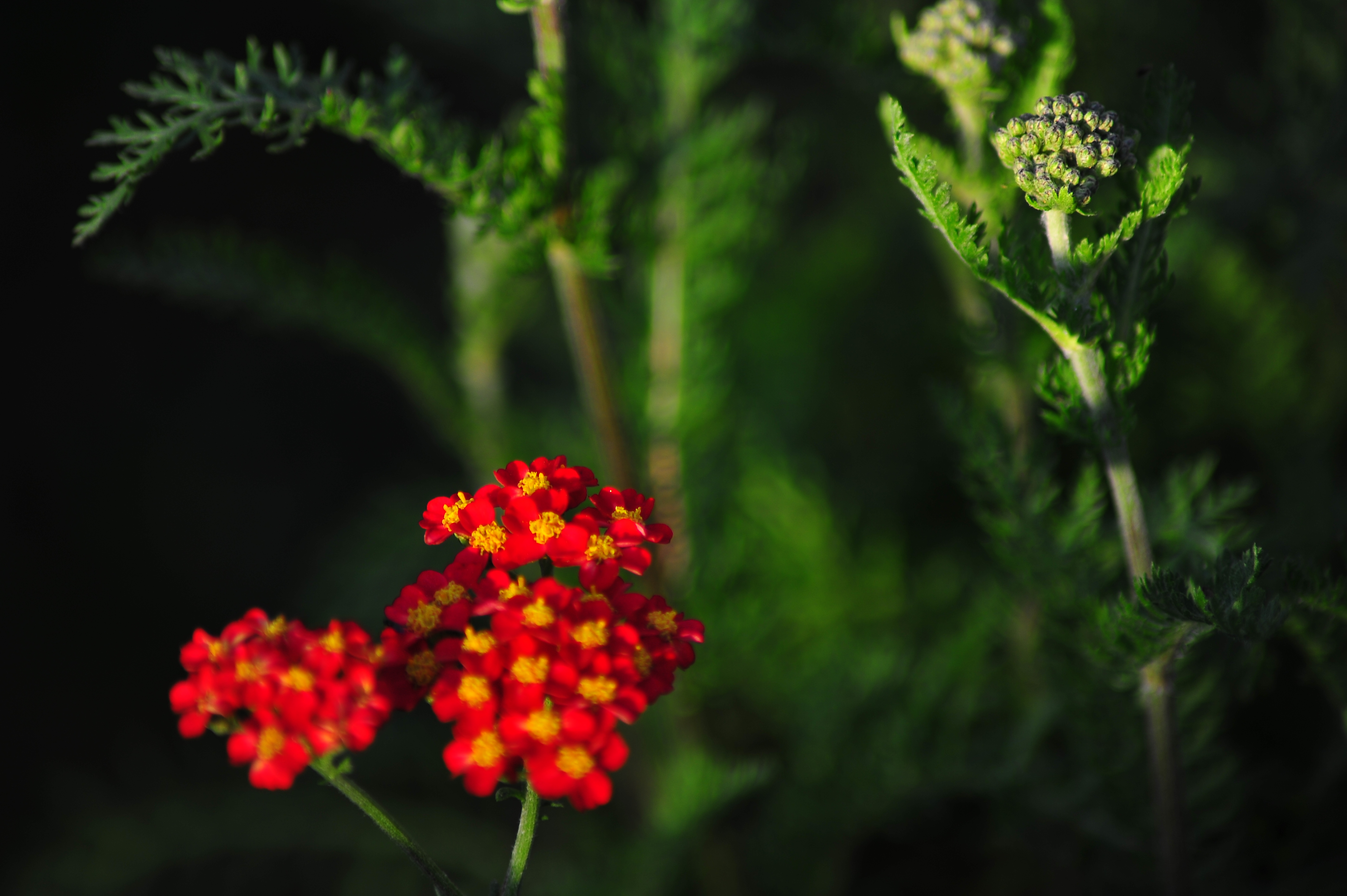 Little red flowers photo