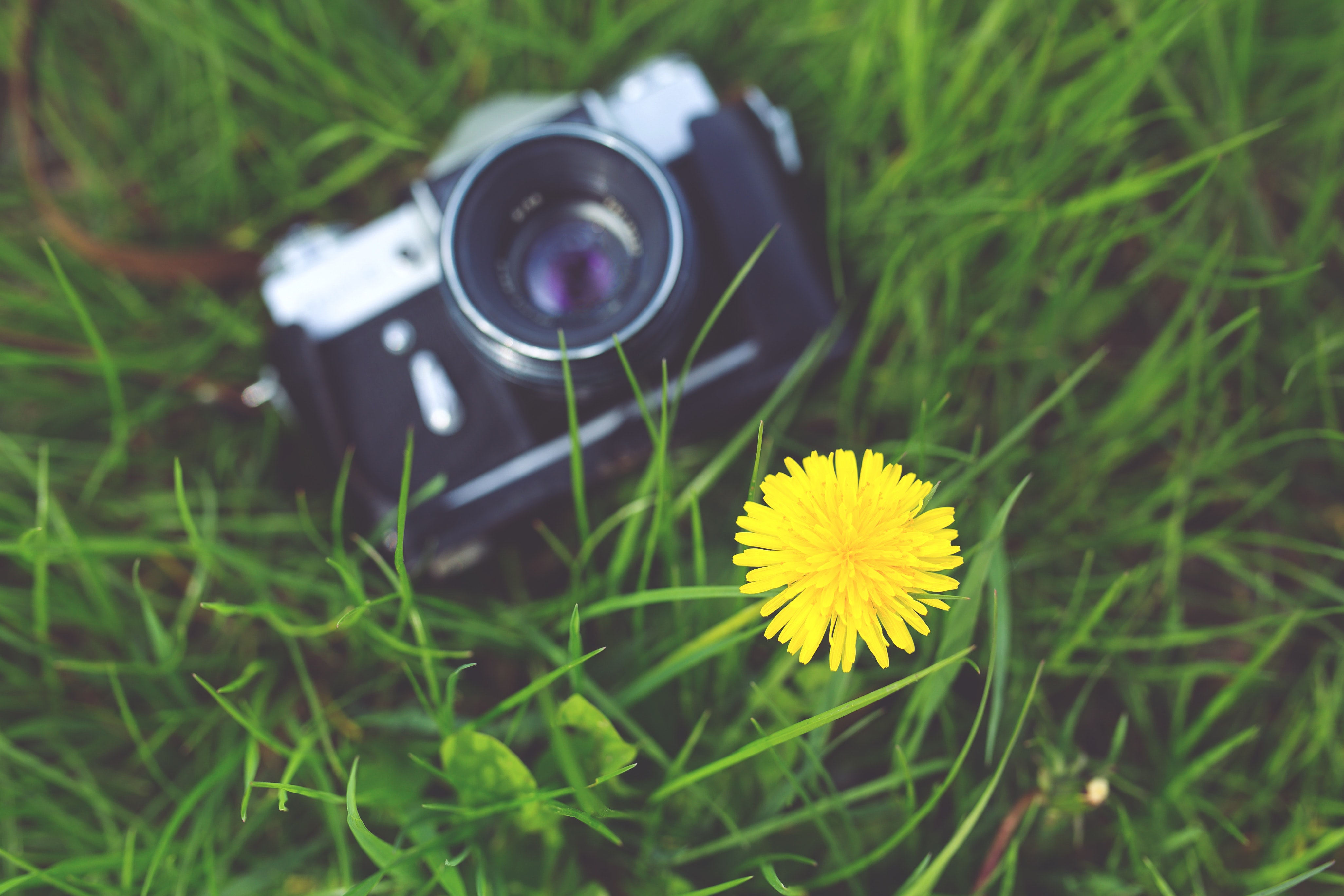 Free Photo Little Yellow Flower And Old Camera Summer Spring