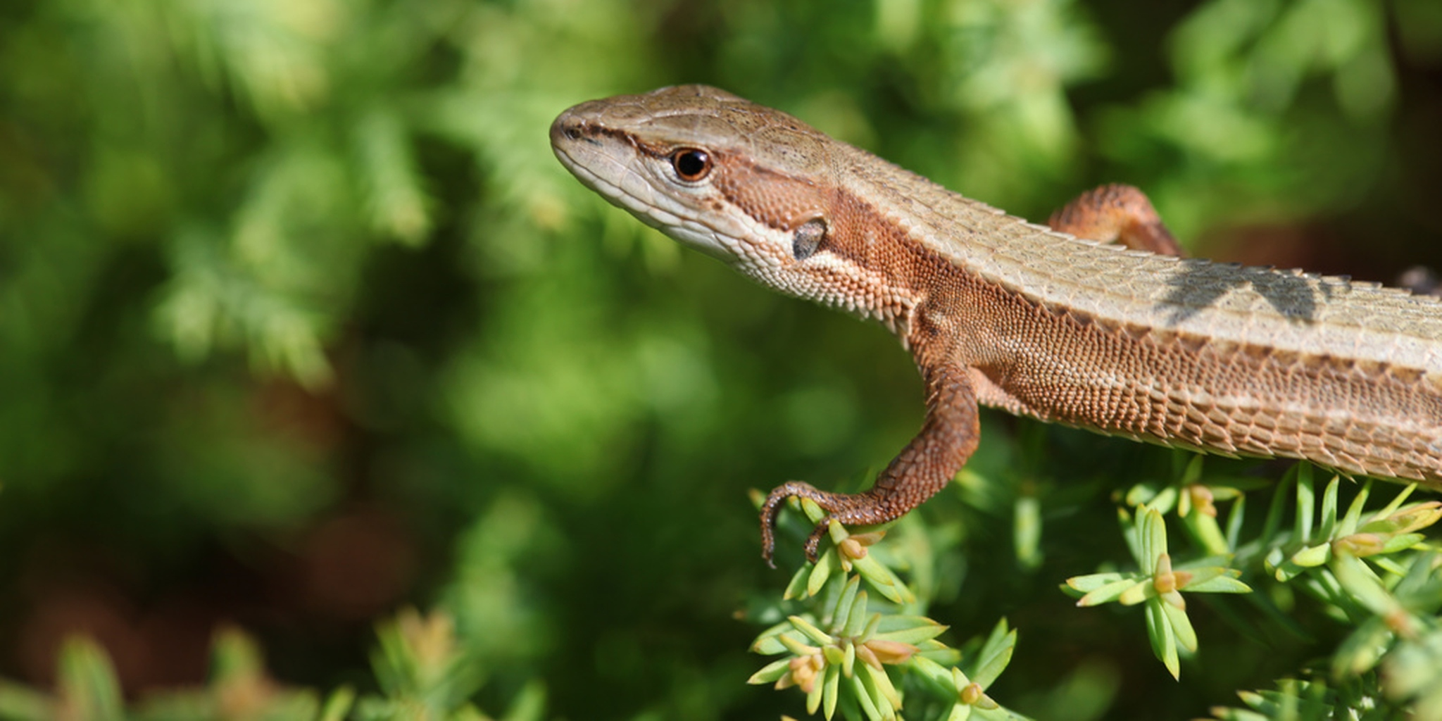 Questions I have about these people making out with a lizard | The ...