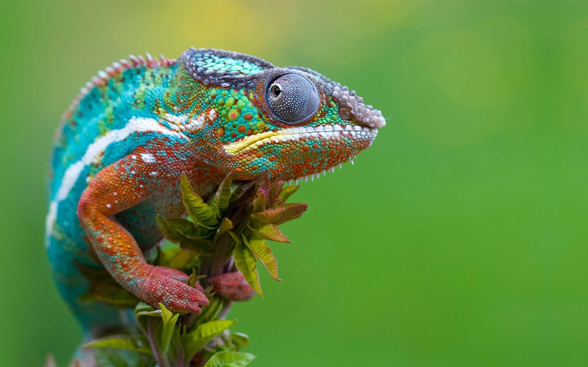 2 Lizards - Lessons - Tes Teach