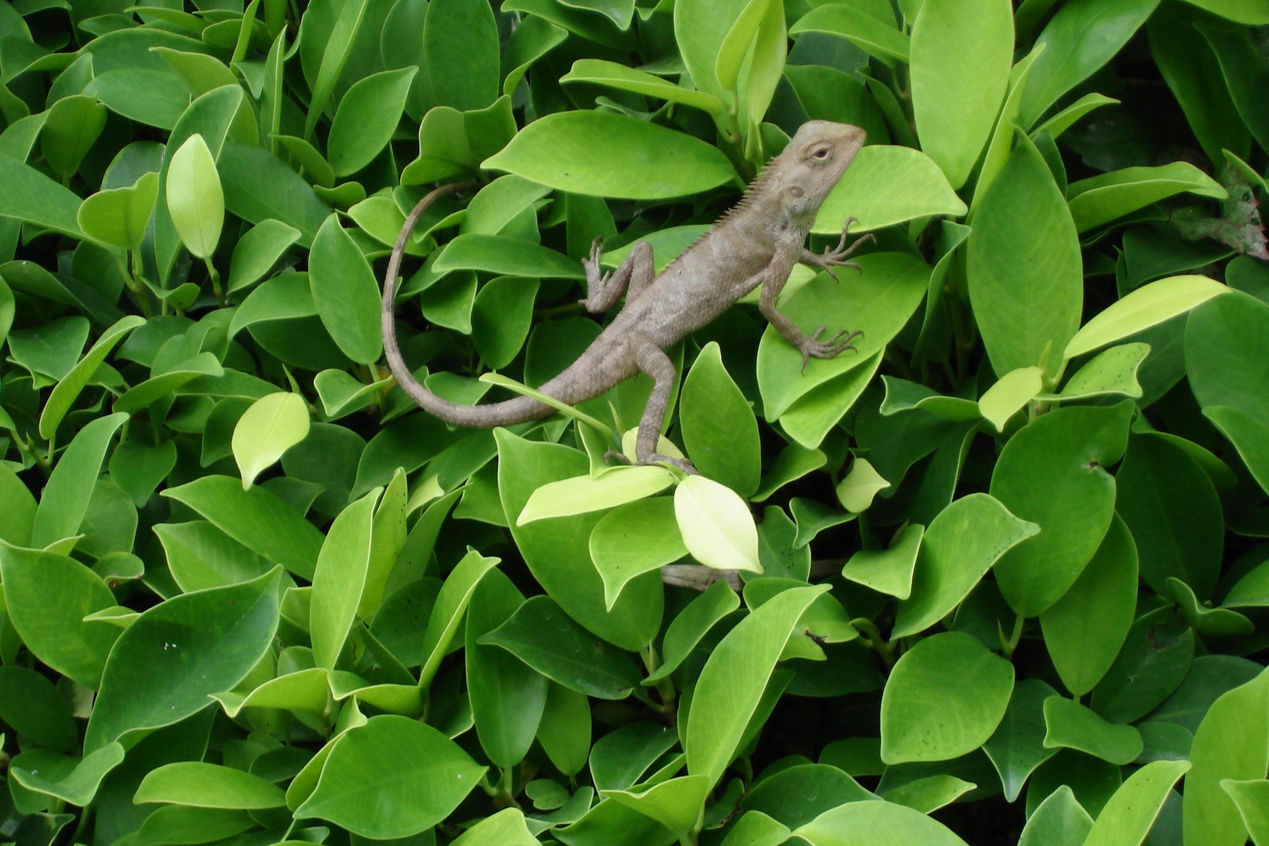 Lizard, Amphibian, Future, Ugliness, Tower, HQ Photo