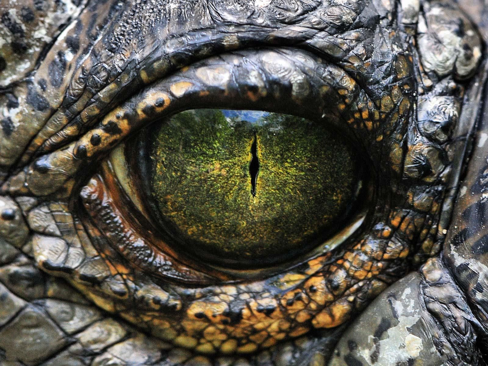 reptile eyes - Поиск в Google | Animals | Pinterest | Eye, Reptiles ...