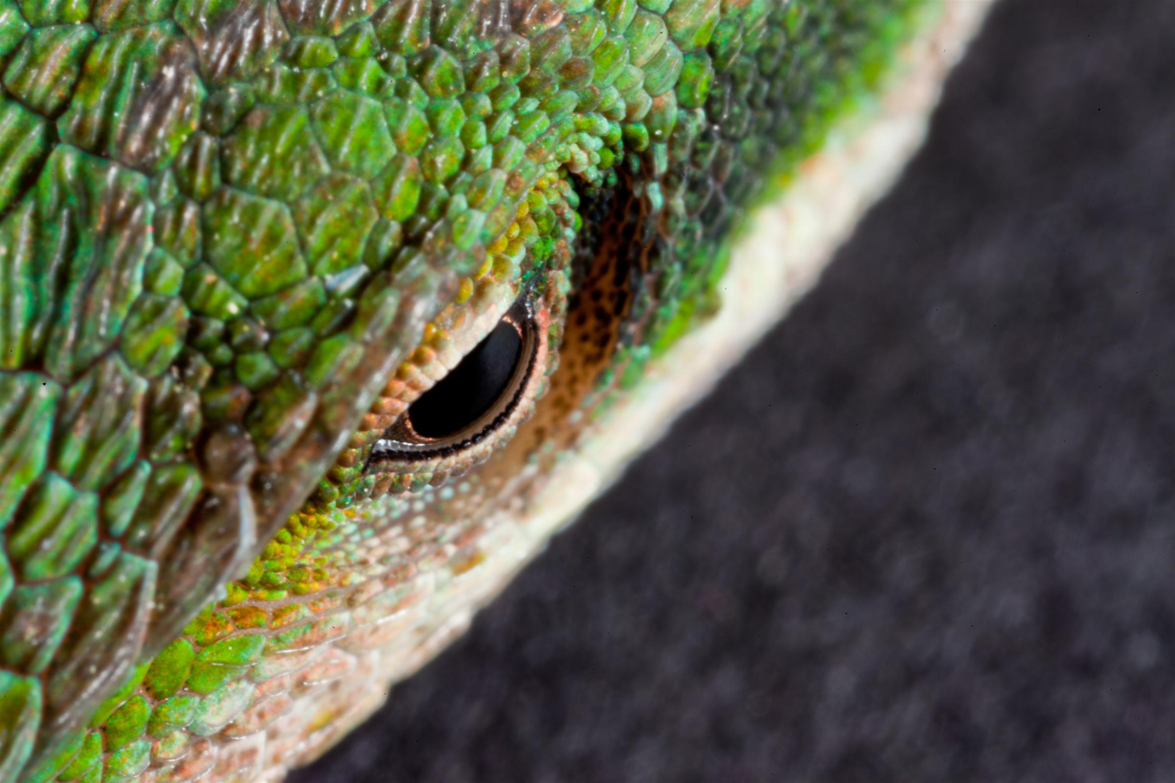 Lizard Eye, Reptile, Lizard, Eye, HQ Photo