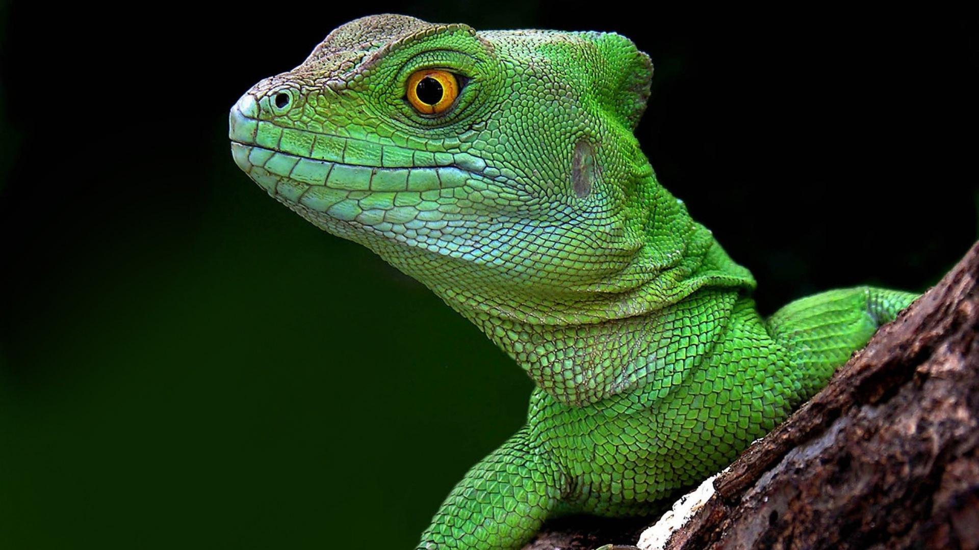 Lizard head photo