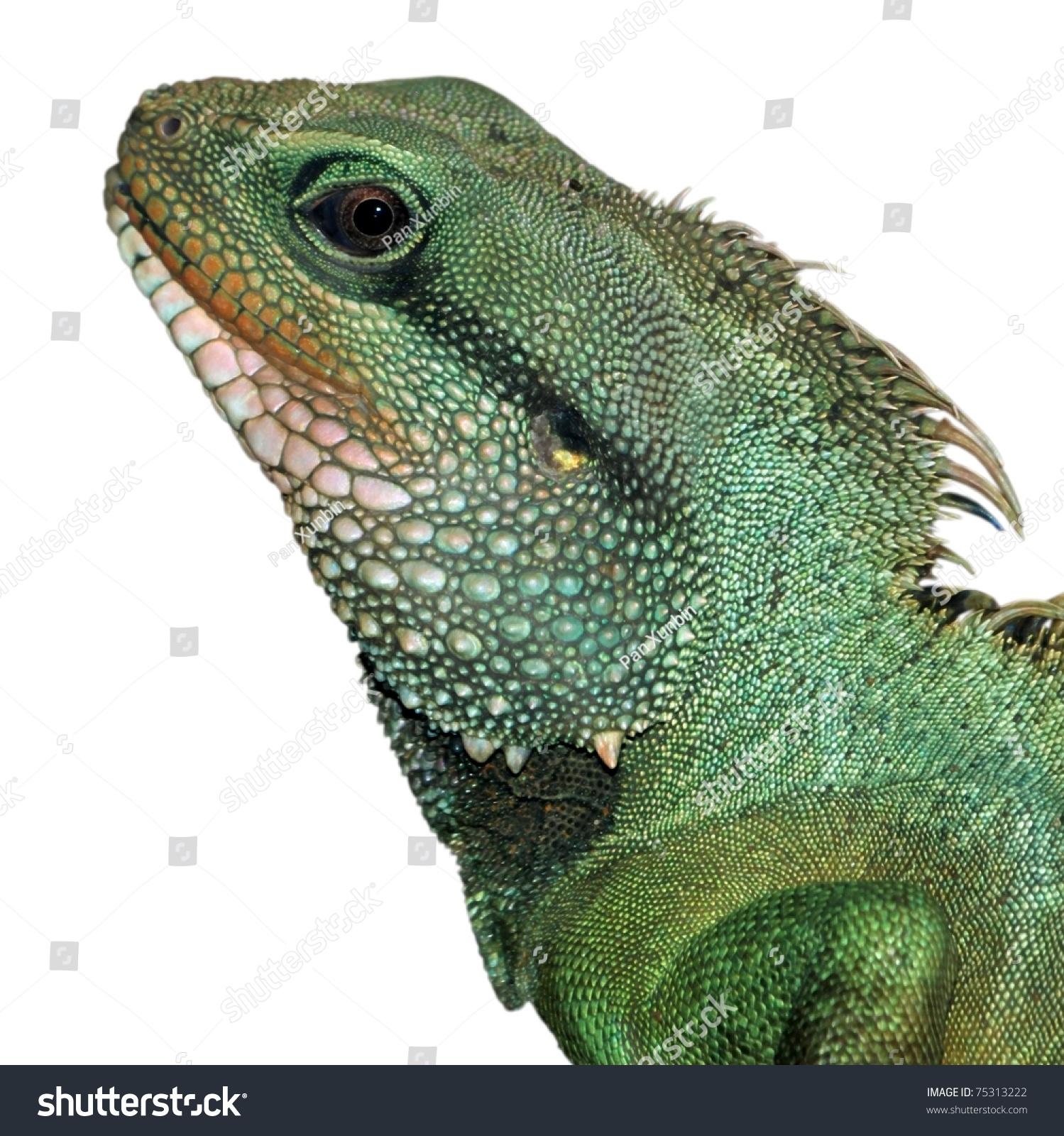 Green Lizard Head Stock Photo (Royalty Free) 75313222 - Shutterstock