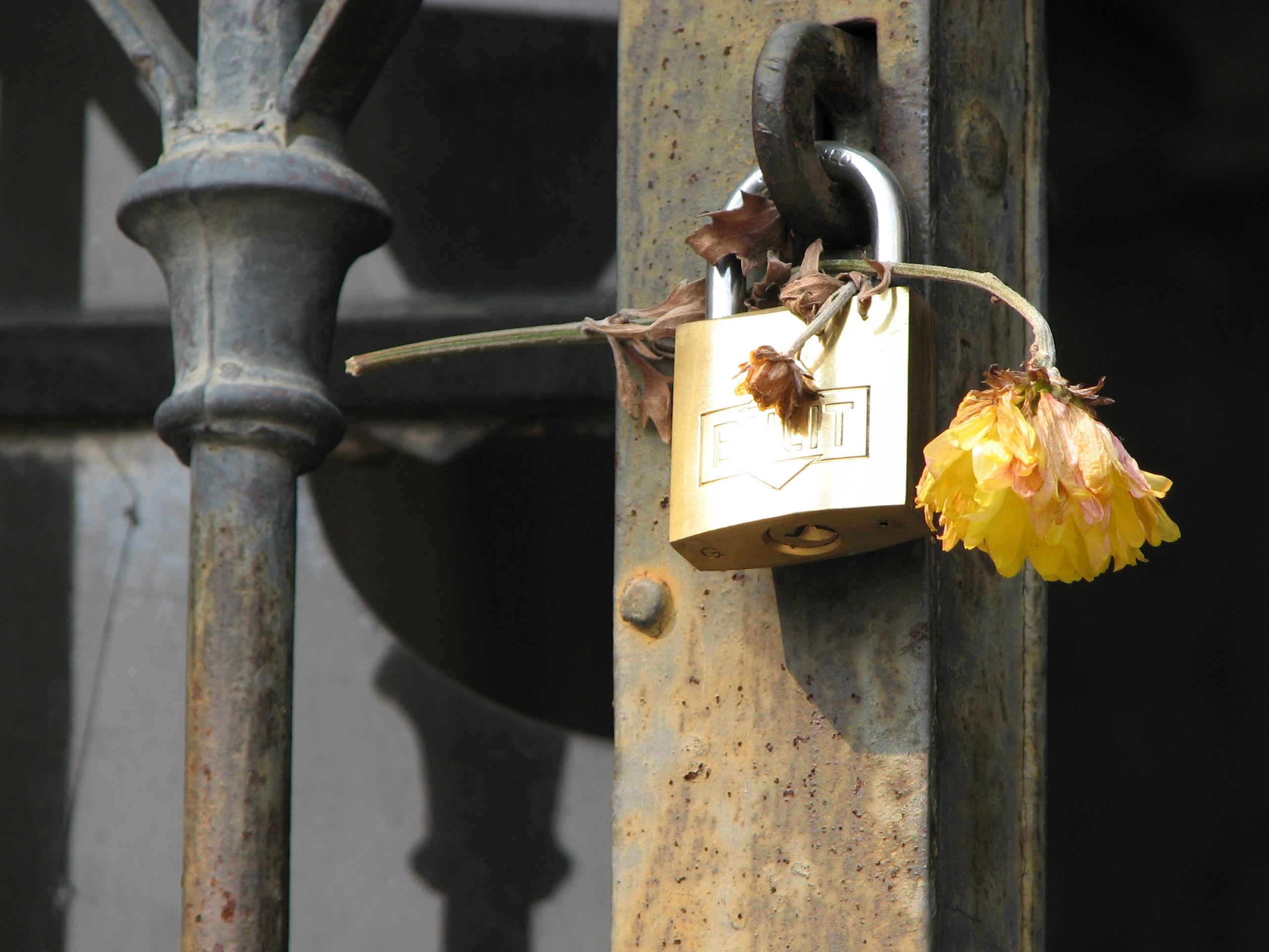 Lockflower photo