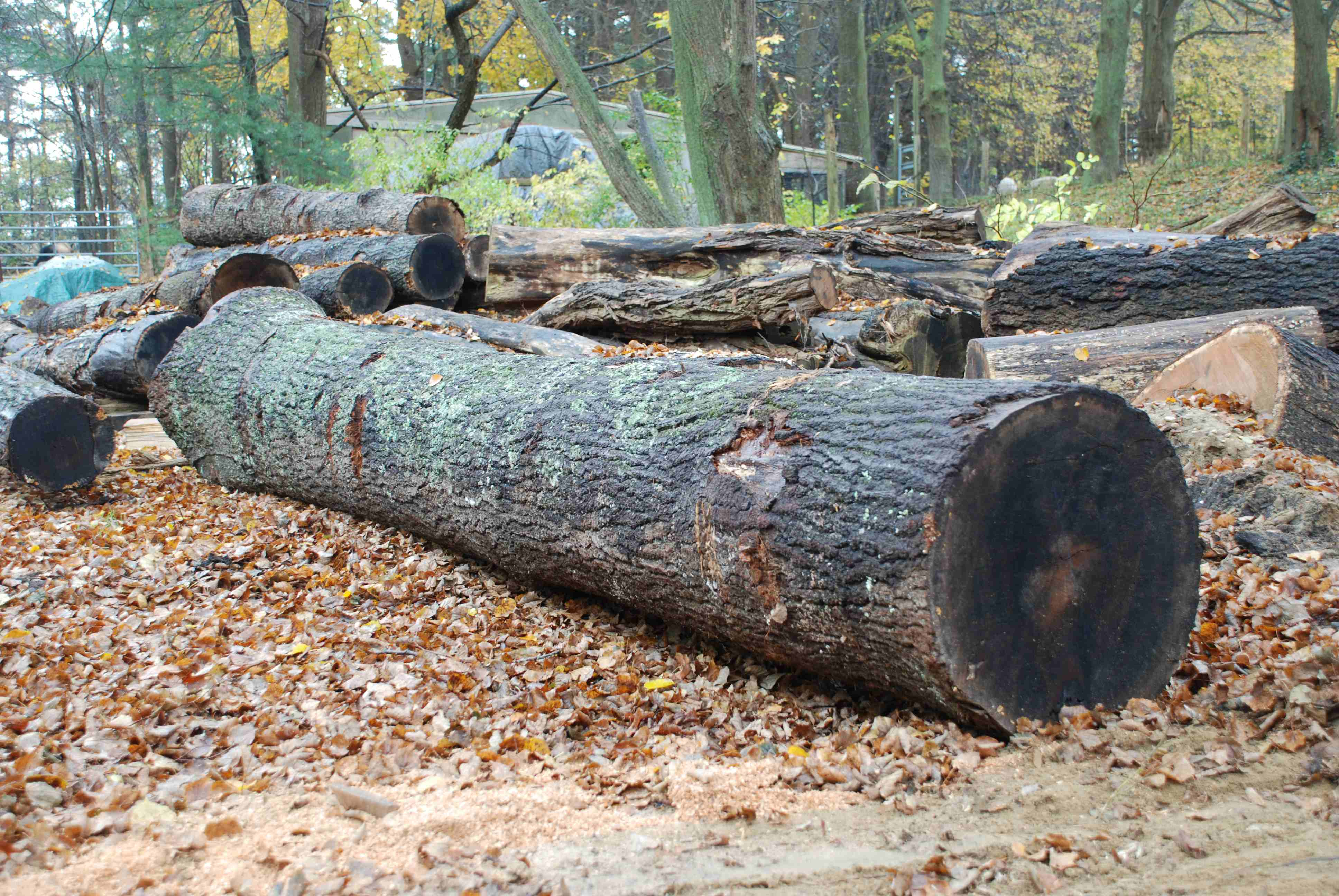 Log dreams meaning - Interpretation and Meaning
