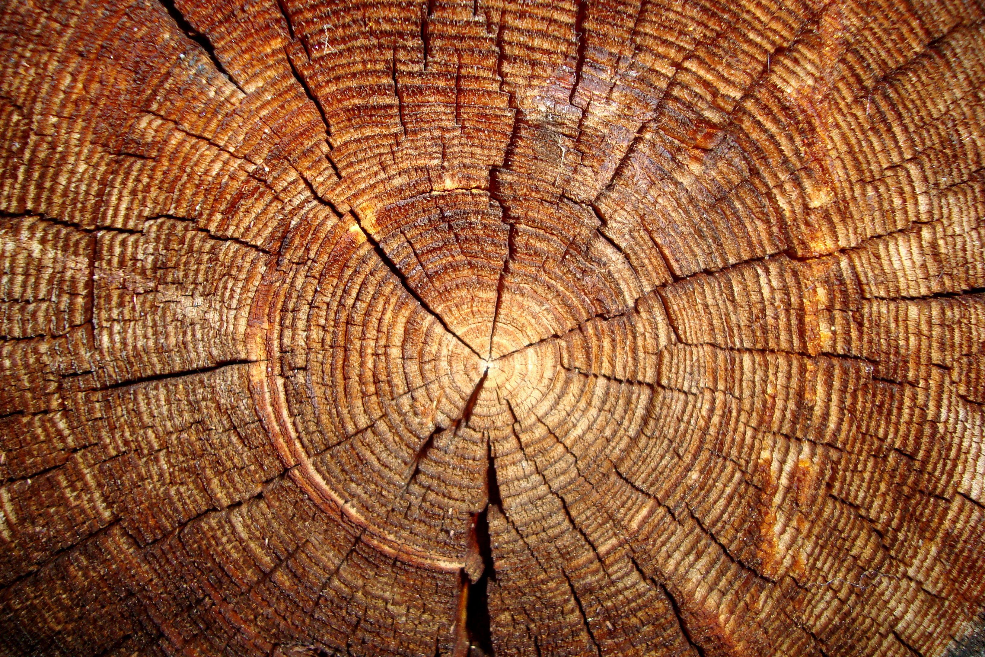 log texture, log texture