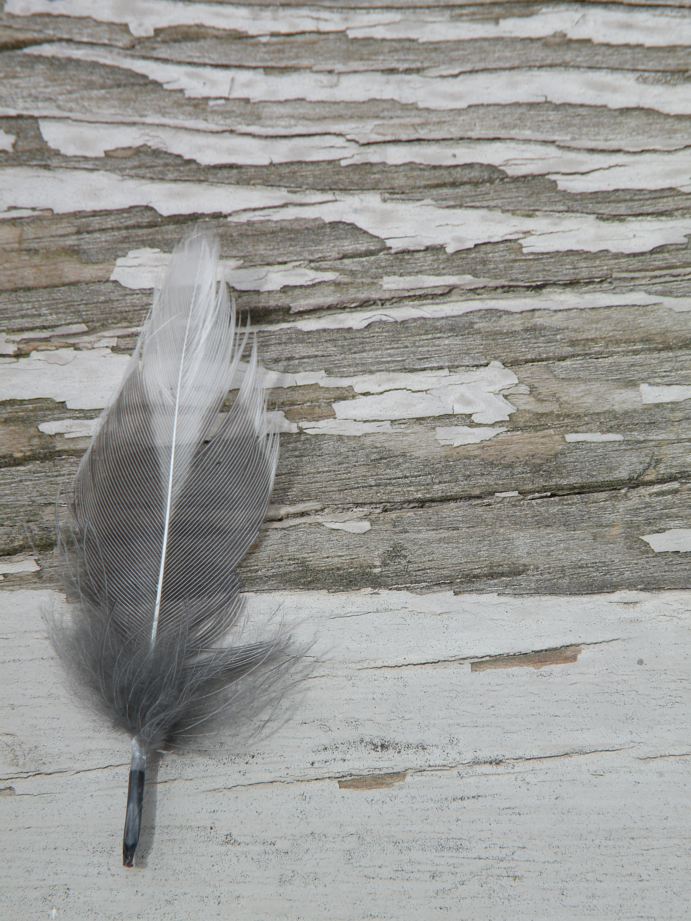 Lone Feather, Distressed, Feather, Wood, HQ Photo
