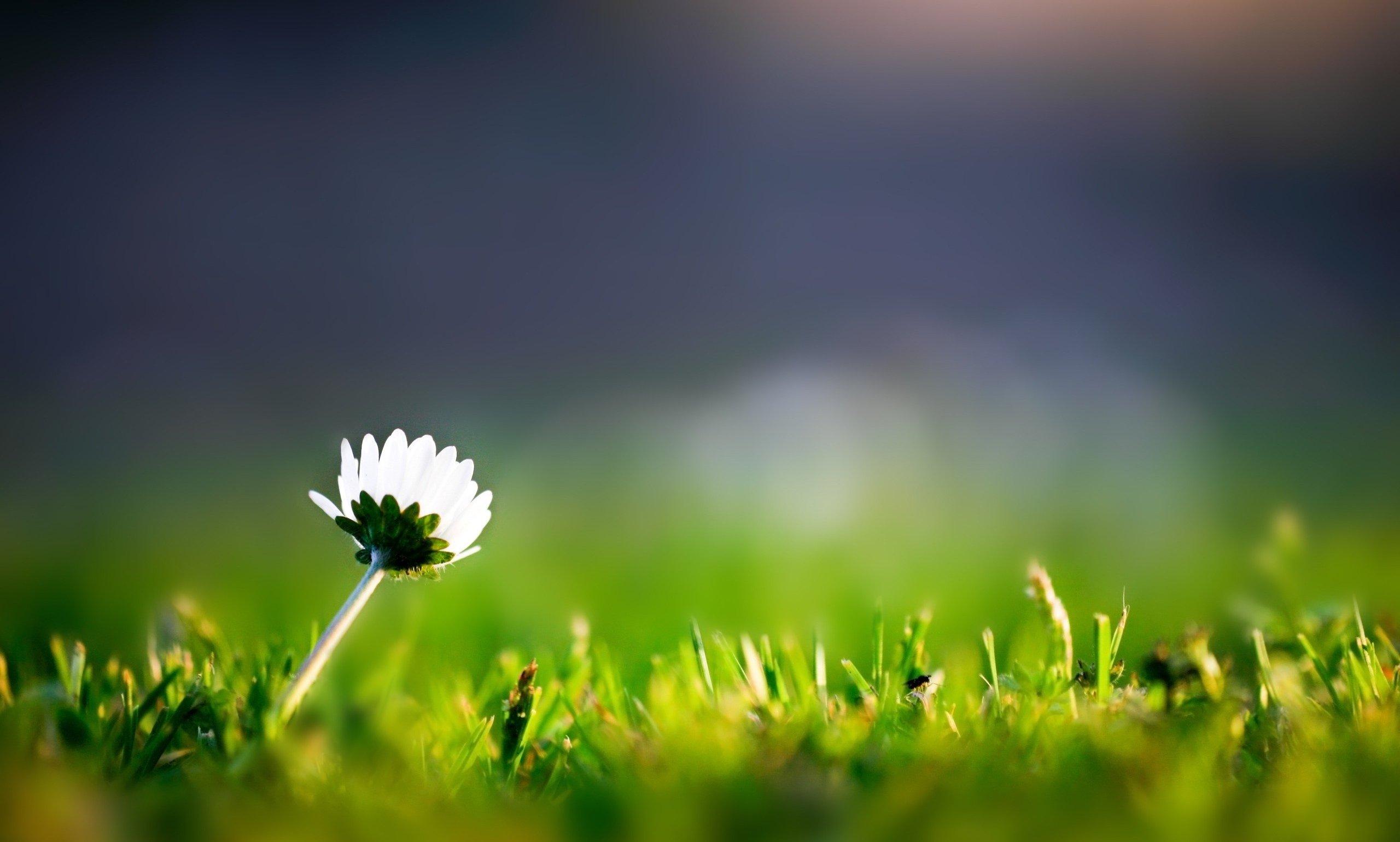 Lone flower photo