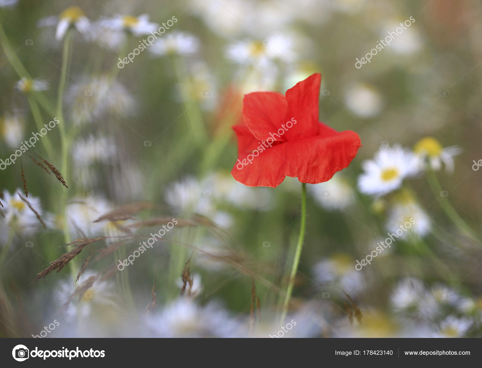 Lone red flower photo