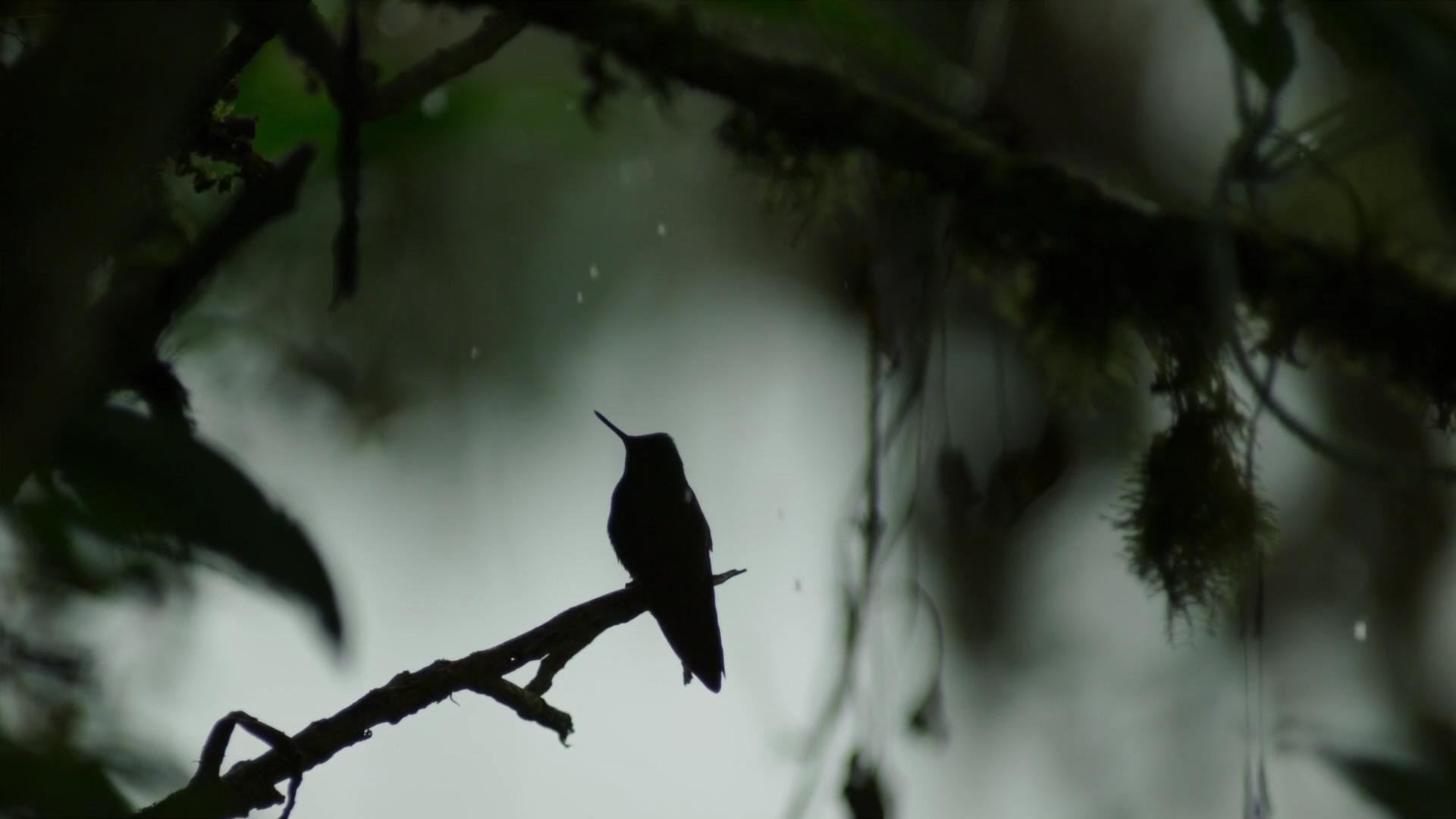 Lonely bird photo