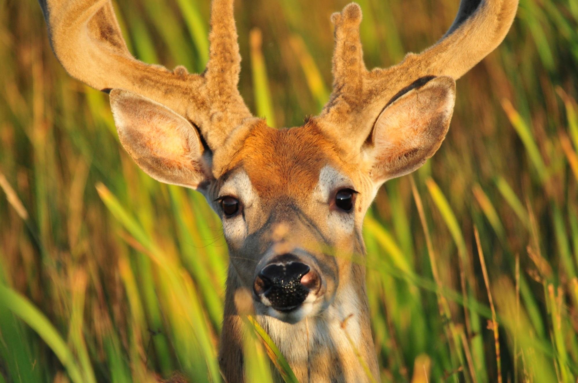 Lonely deer photo