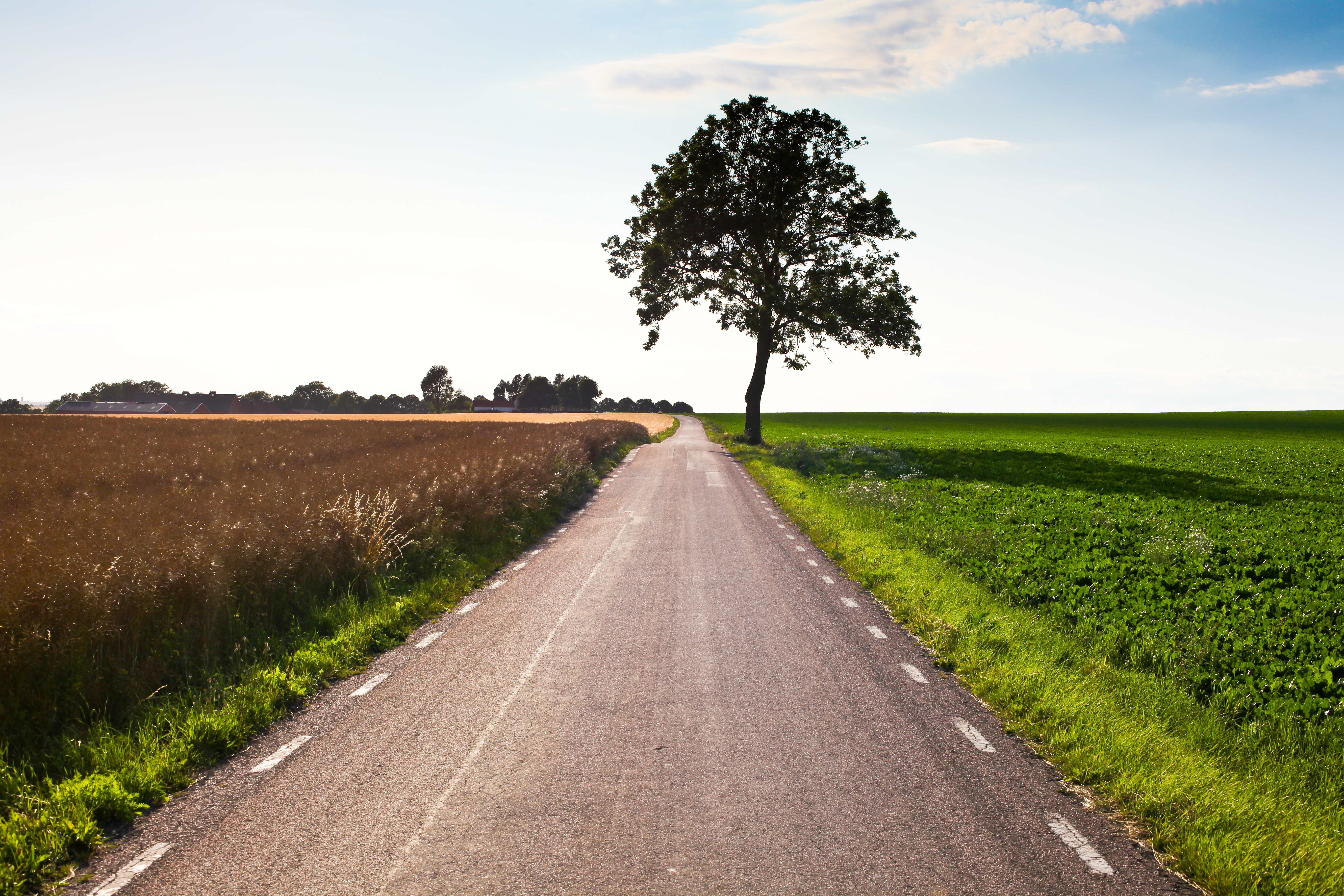 Lonely road, lonely tree | photo page - everystockphoto