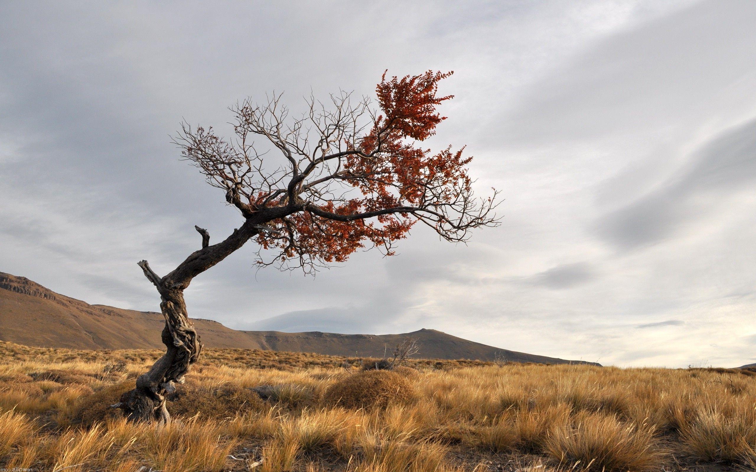 Lonely tree on the field HD desktop wallpaper : Widescreen : High ...