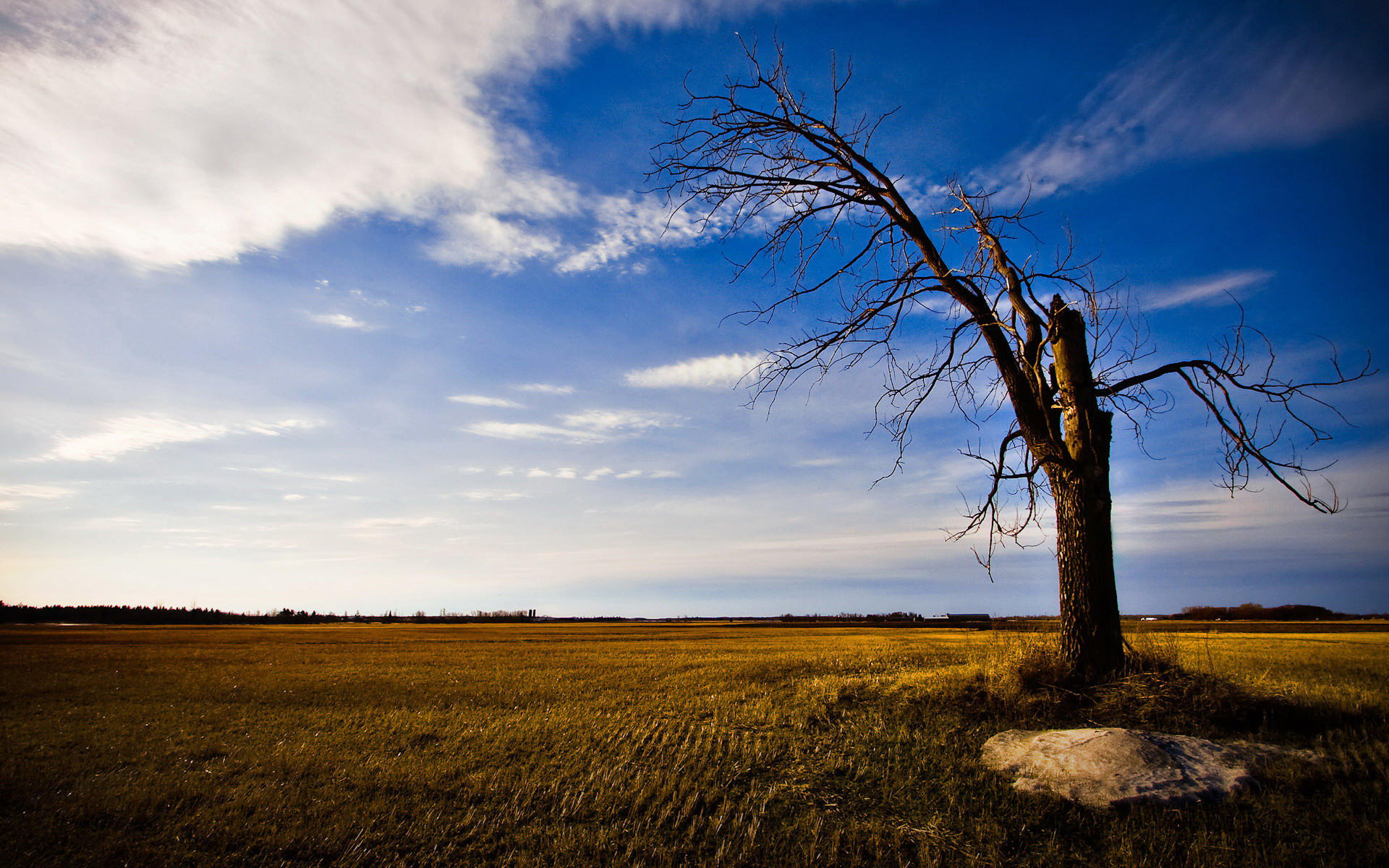 Broken lonely tree / 1920 x 1200 / Nature / Photography | MIRIADNA.COM