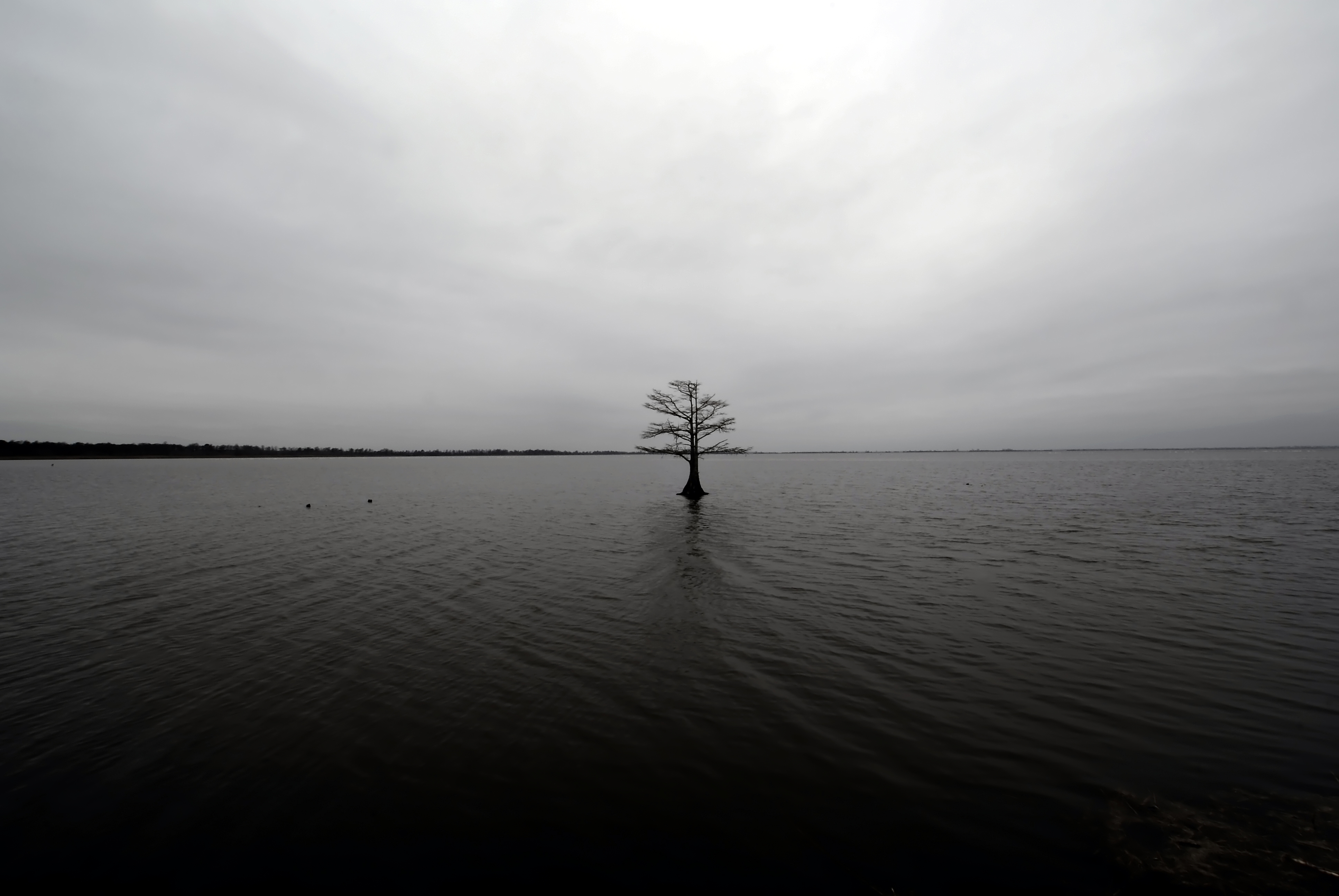 Lonely tree on a lake photo