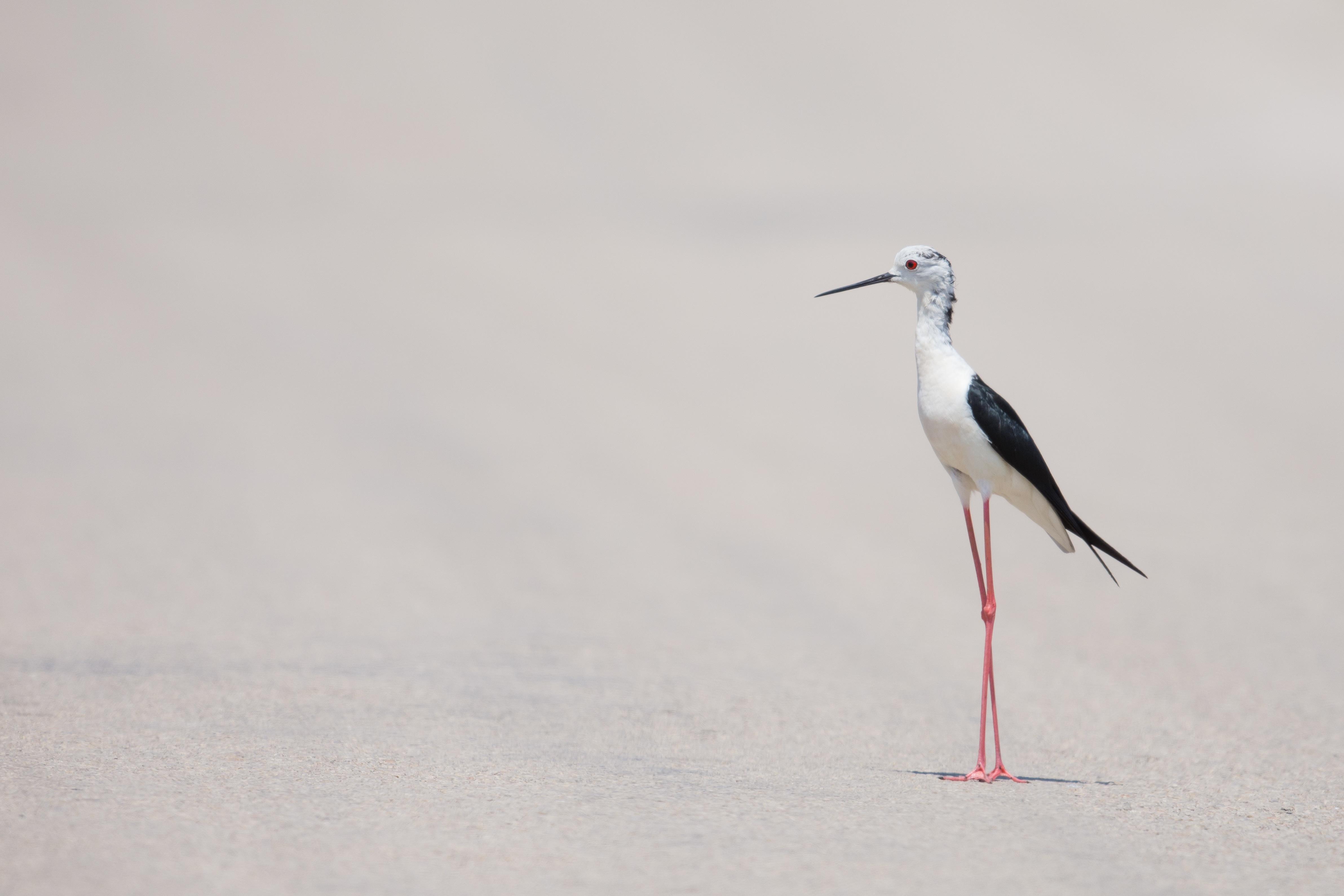 Long Legs, Bird, Leg, Long, Nature, HQ Photo