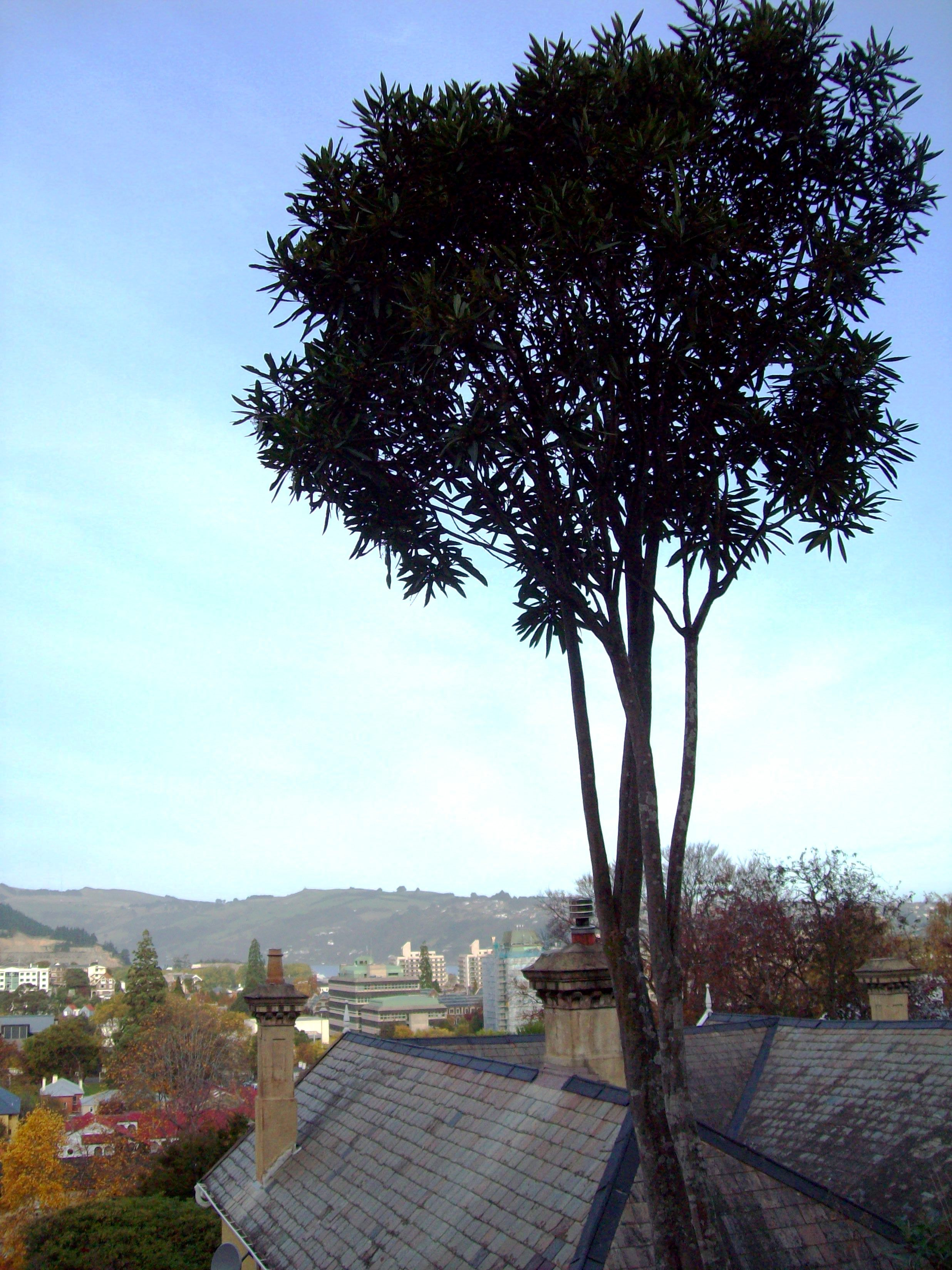 Looking out over autumn in dunedin photo