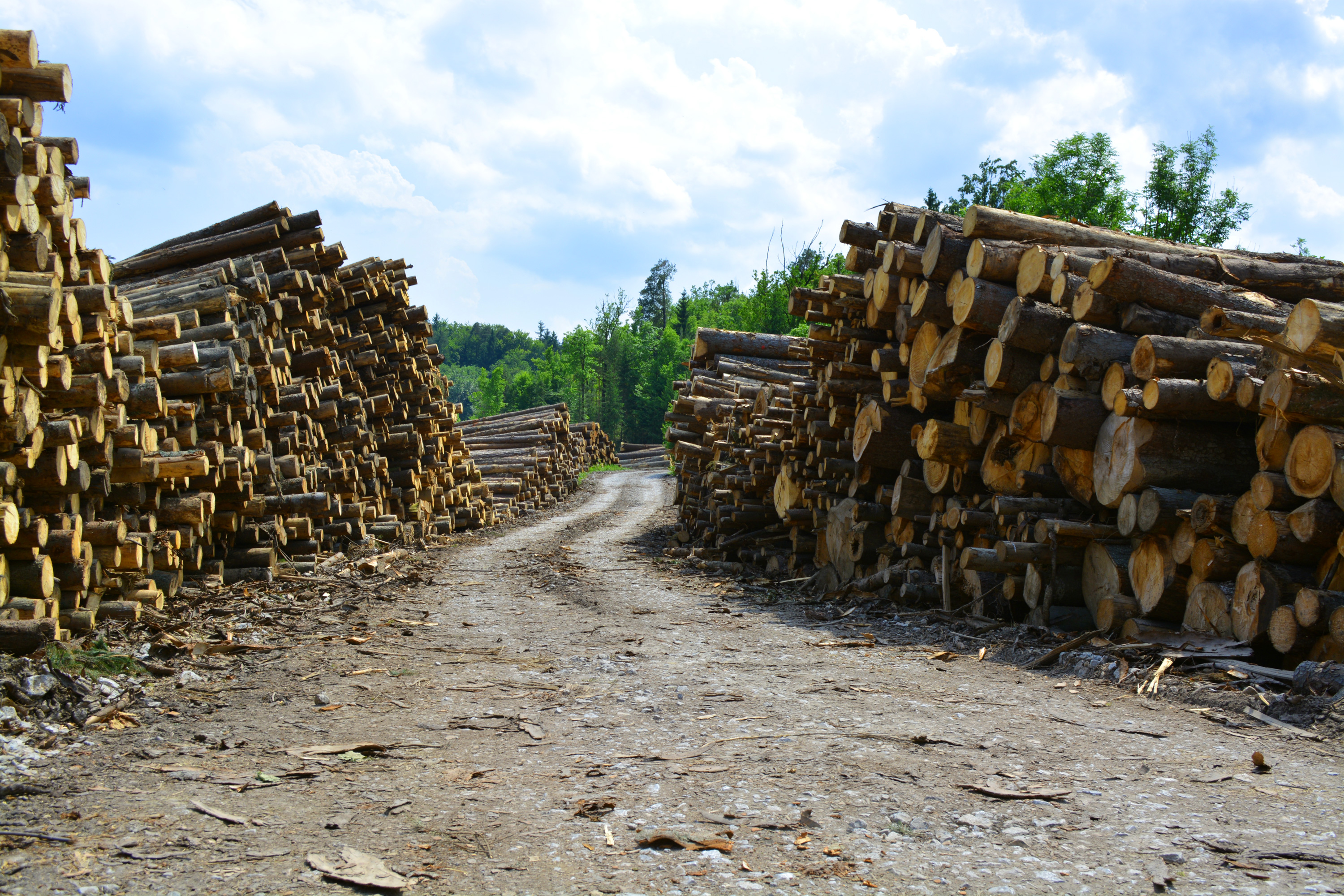 Lots of wood logs, Stacked, Raw, Renewable, Resource, HQ Photo