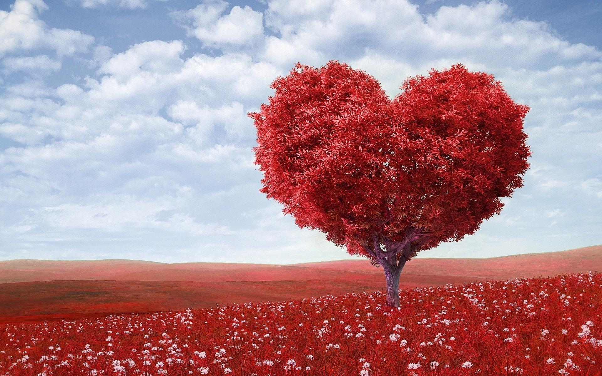 Love photos · Pexels · Free Stock Photos