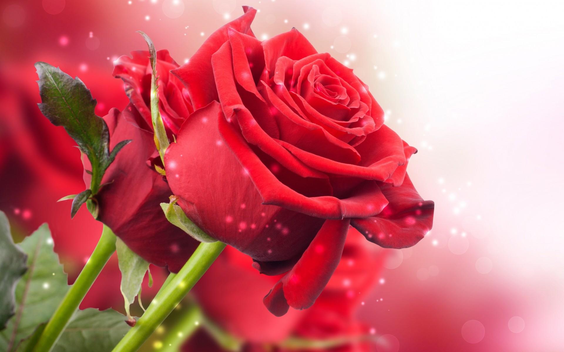 Love & Romance - Sri Lanka Online Shopping Site for Birthday Cakes ...