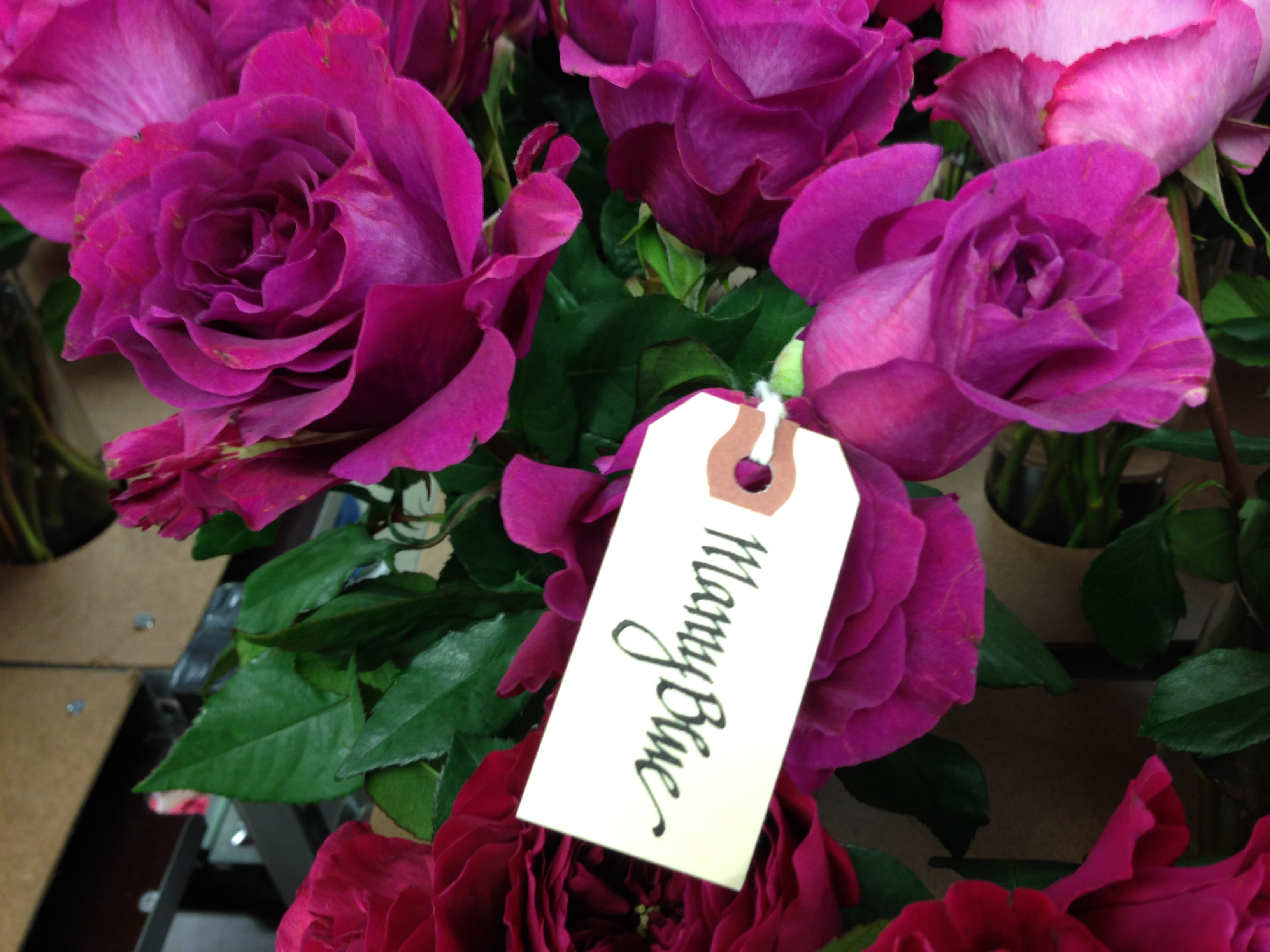 Valentine's Day: Best flowers for Love and Romance – City Blossoms