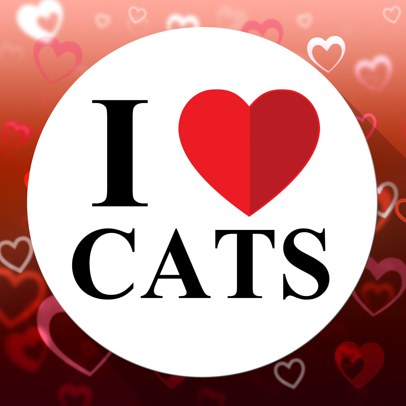 Love Cats Indicates Domestic Fabulous And Like Cat, Agreeable, Love, Terrific, Superb, HQ Photo