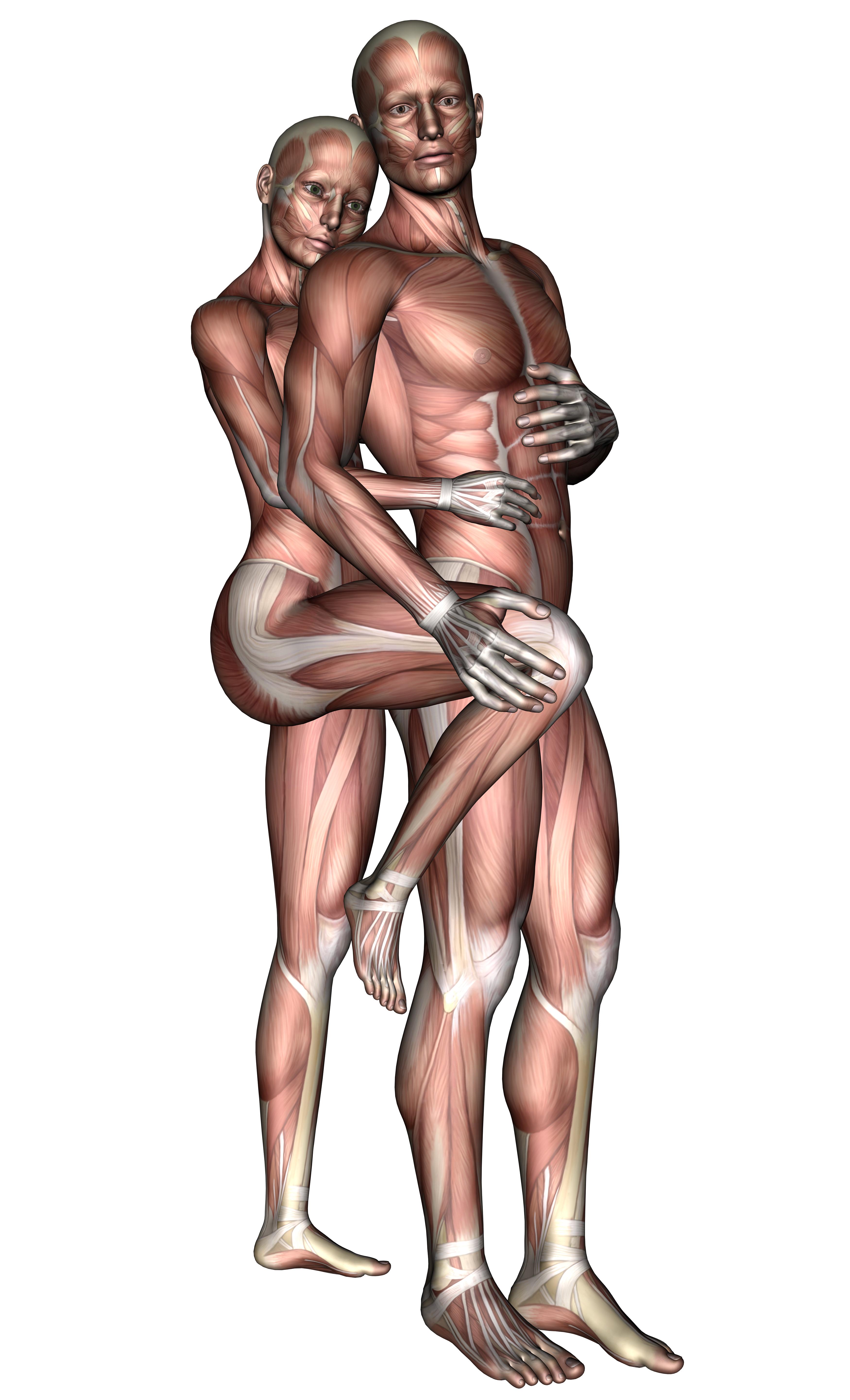 Lovers 2, 3d, Anatomy, Female, Love, HQ Photo