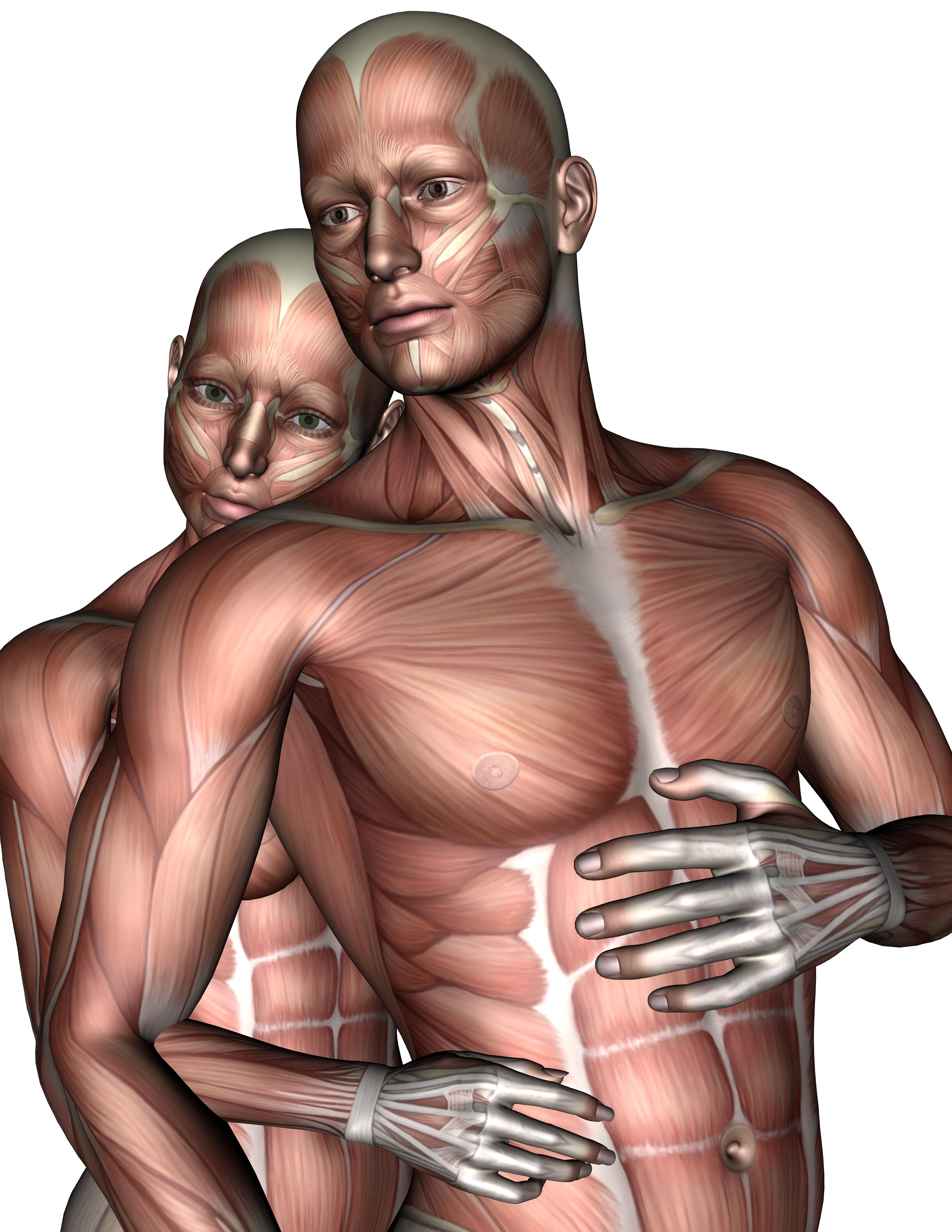 Lovers 3, 3d, Anatomy, Female, Love, HQ Photo