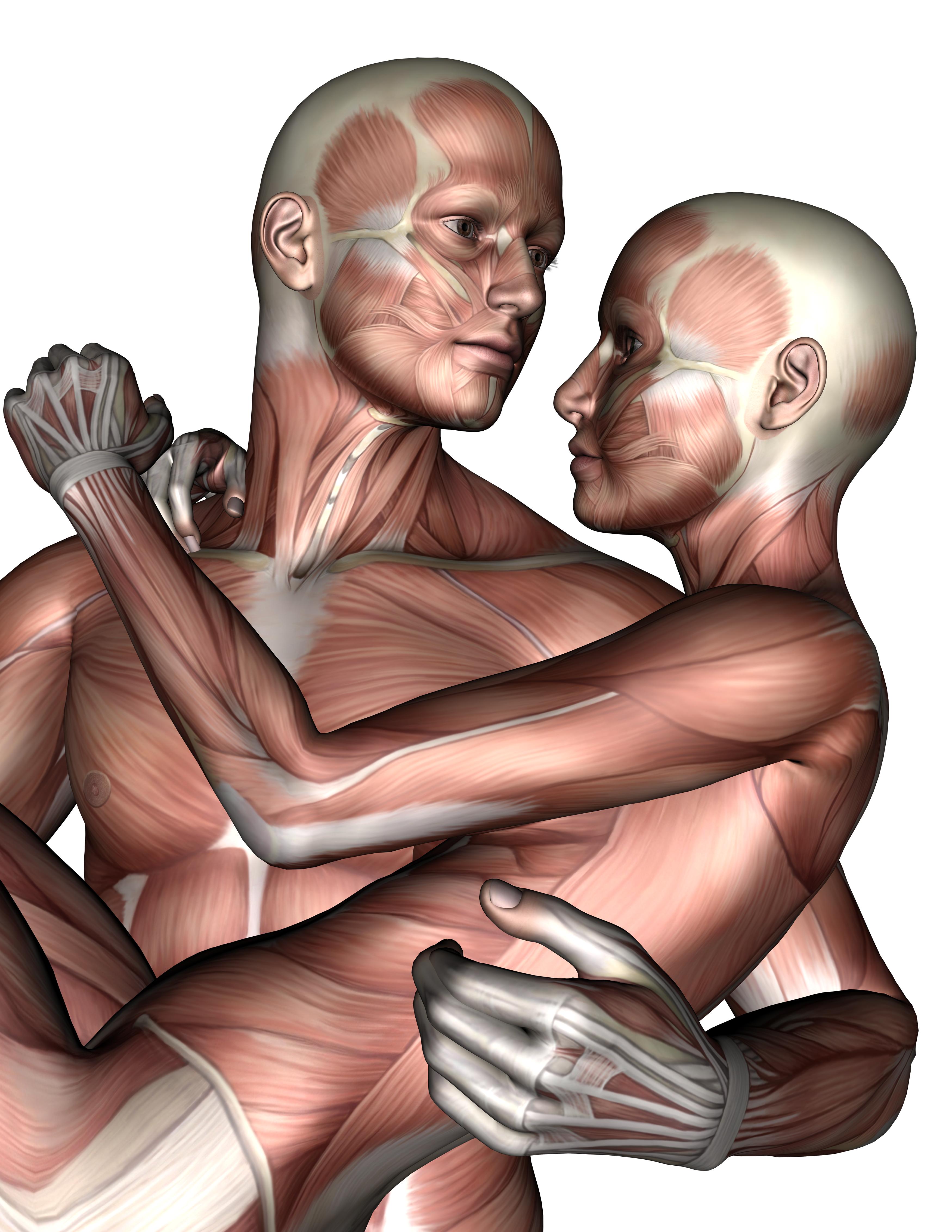 Lovers, 3d, Anatomy, Female, Love, HQ Photo