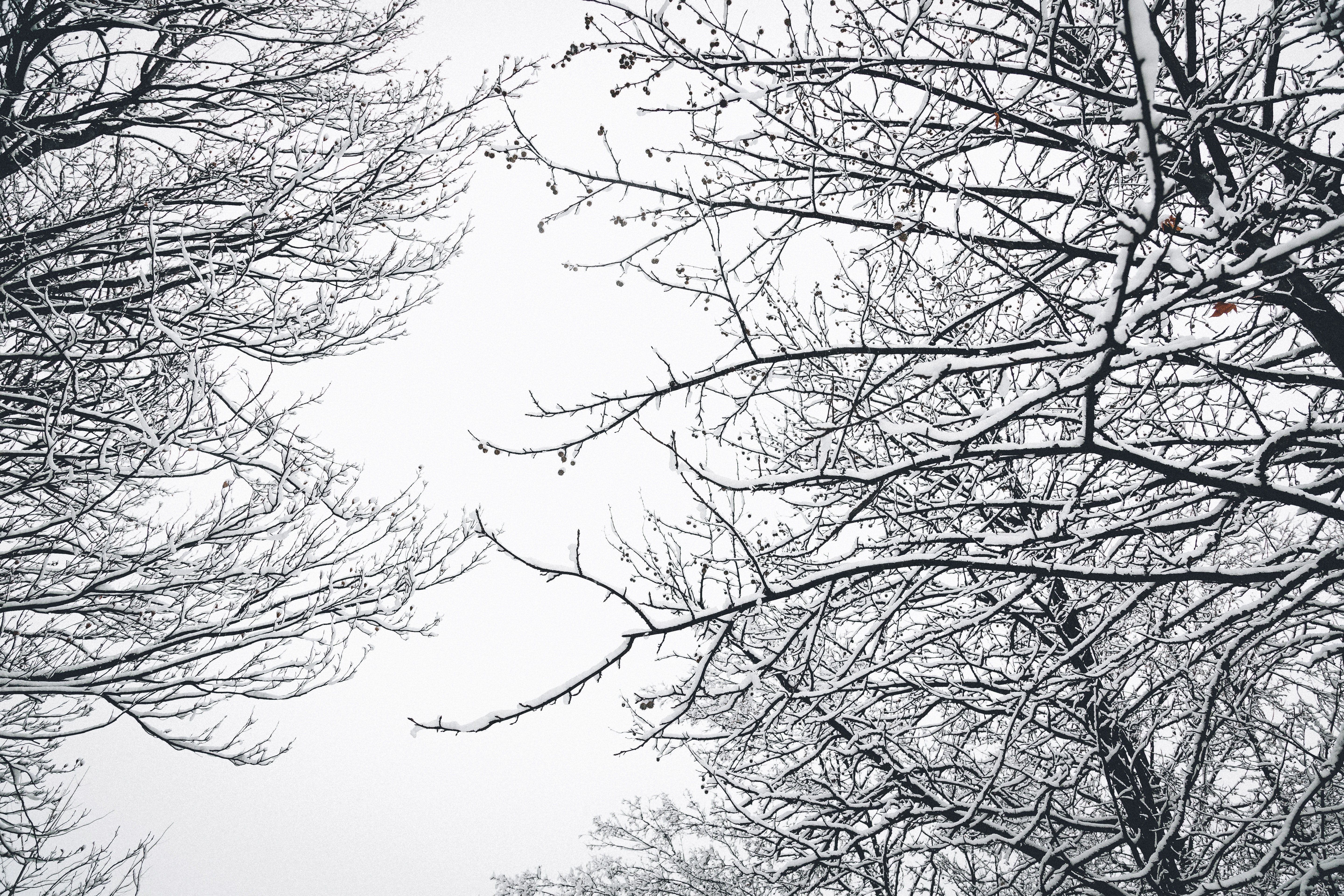 Low Angle Photography of Bare Tree during Winter Season, Branches, Snow, Winter, White, HQ Photo
