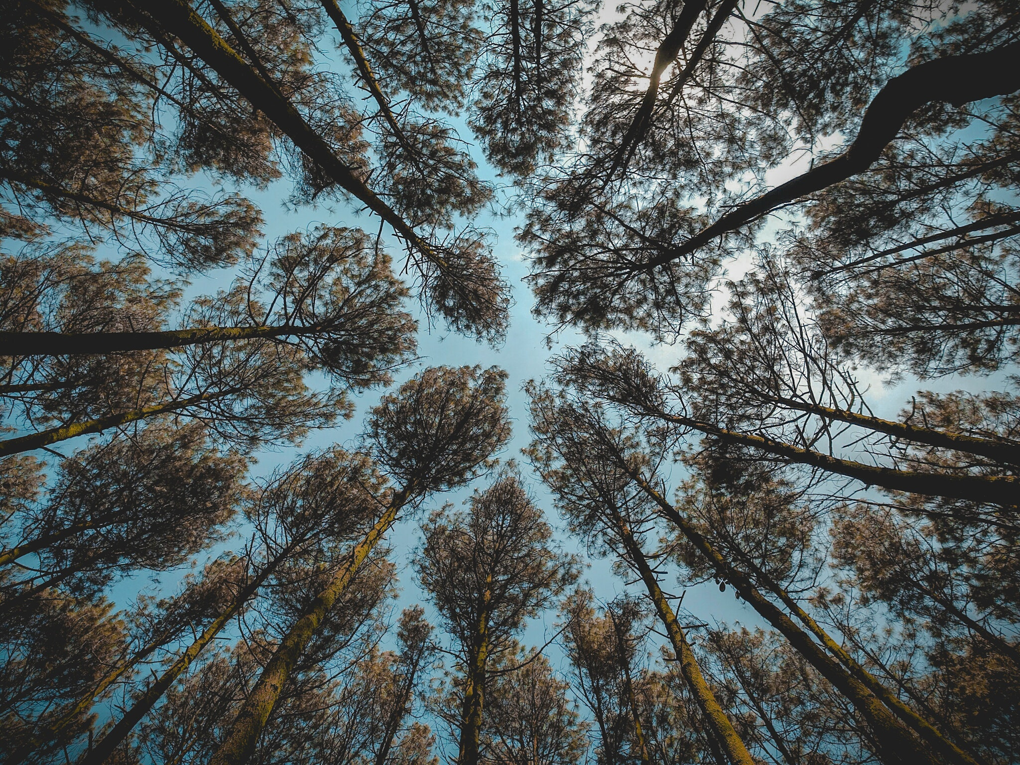 Low angle photography of brown leaf forest trees at daytime